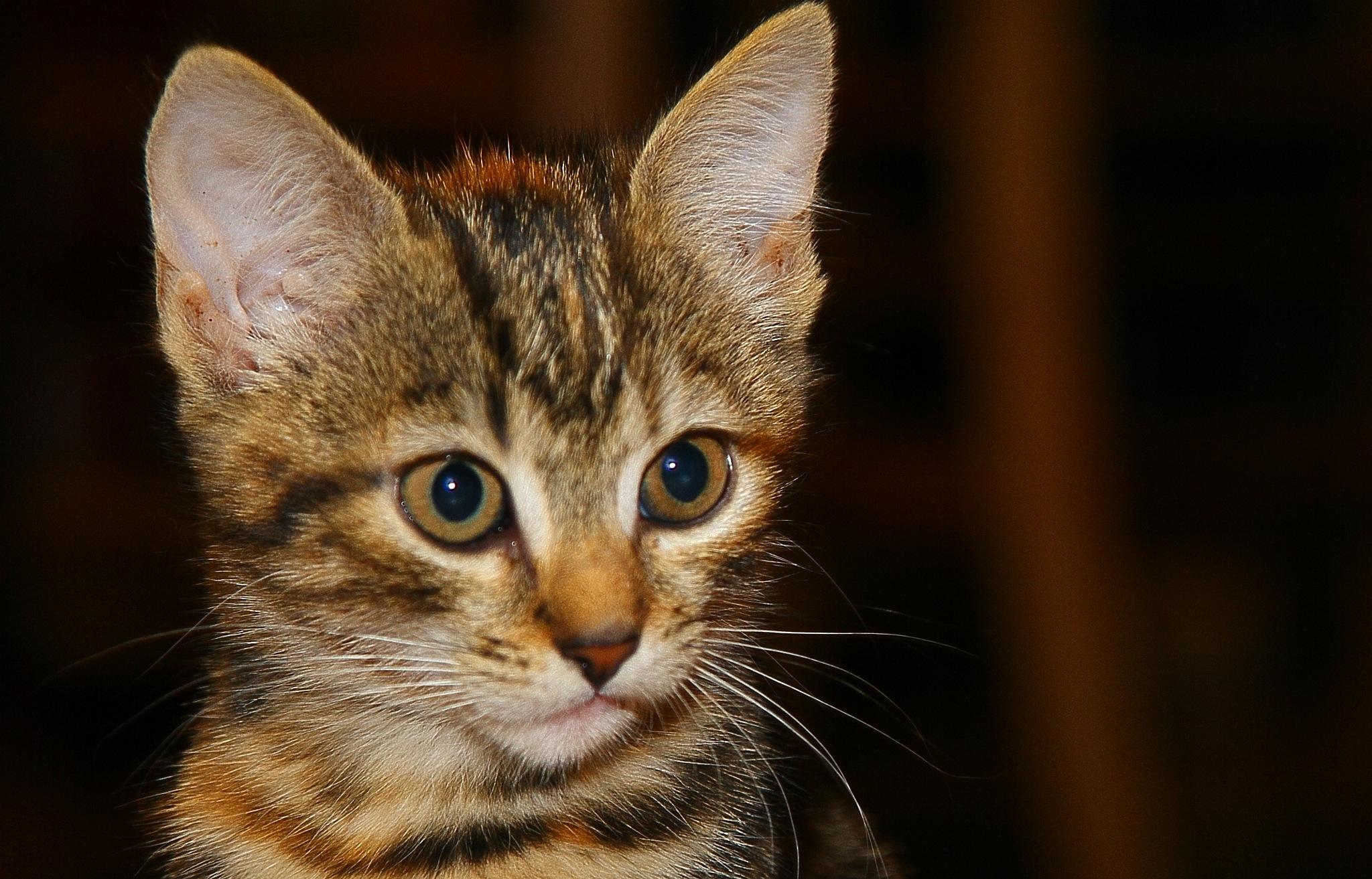 Kitten 3 by Thomas Lenz