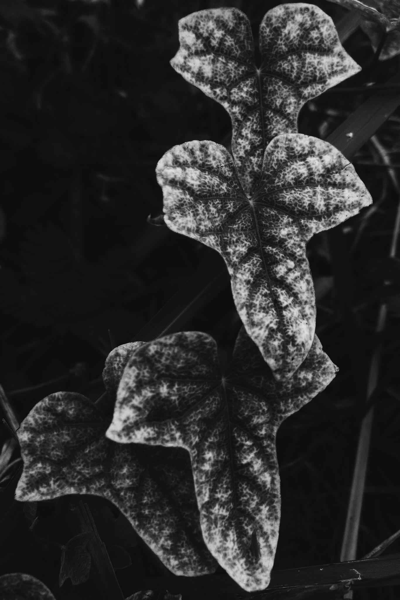 leaf by Ismah Marniati