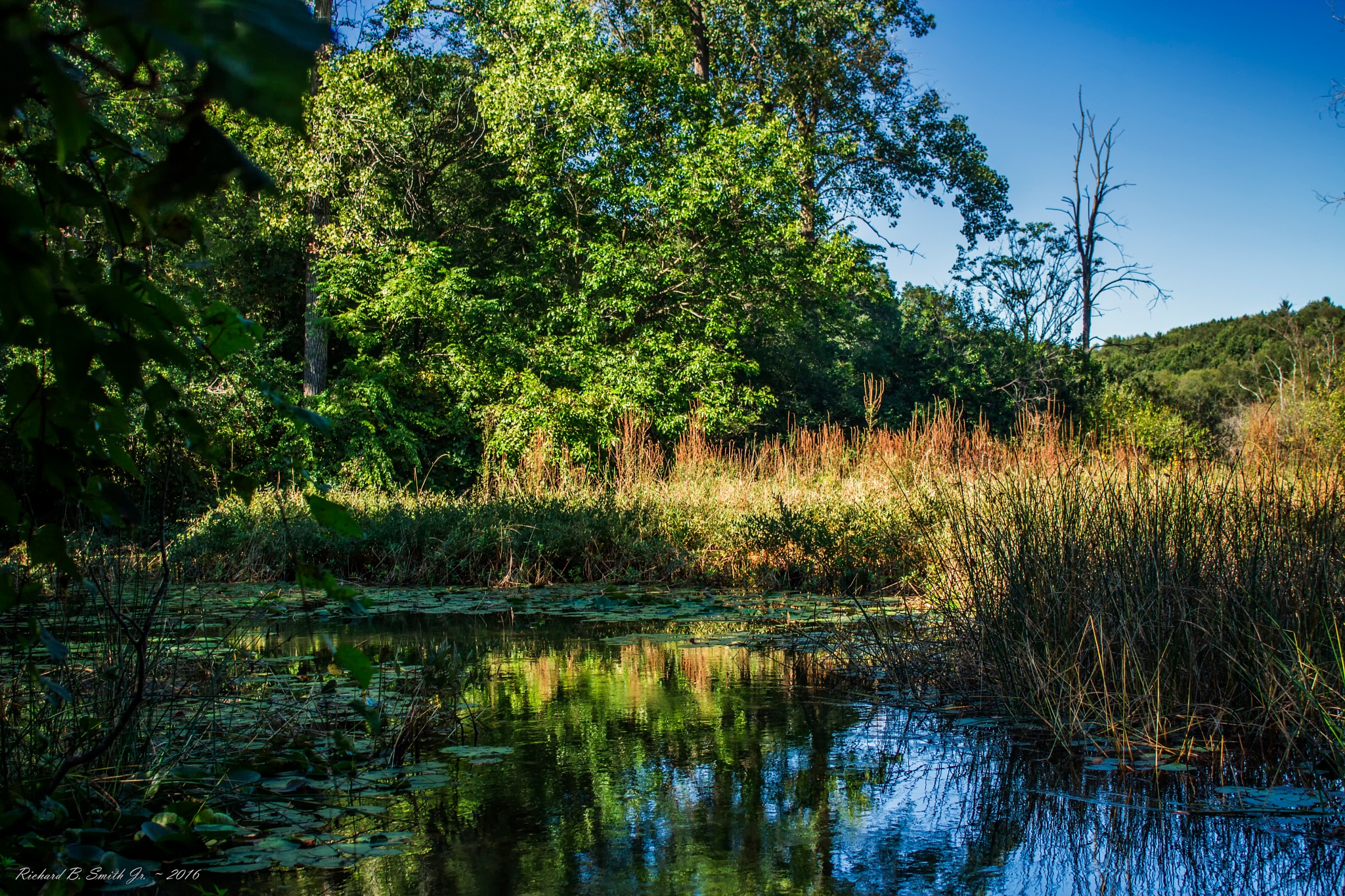 McLinden Trail Pond by Richard B.  Smith Jr.