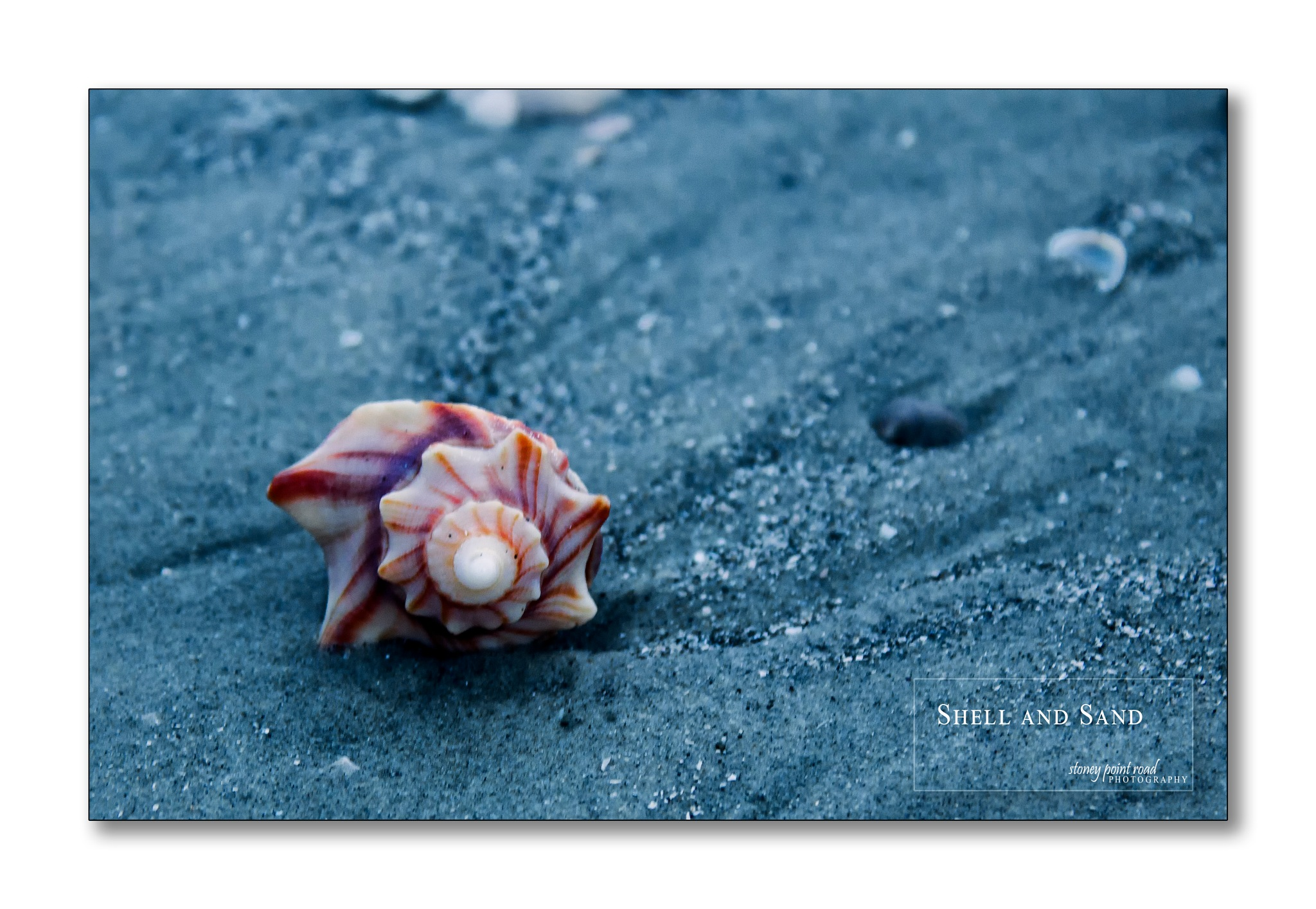Shell and Sand by Richard B.  Smith Jr.
