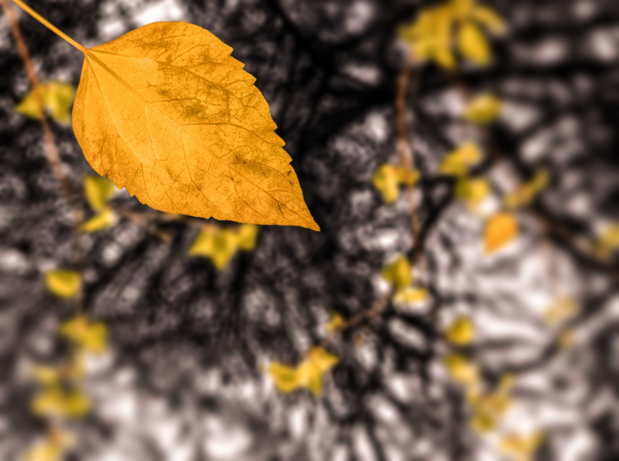 Autumn Leaves by Mohamed Sayed Aouf