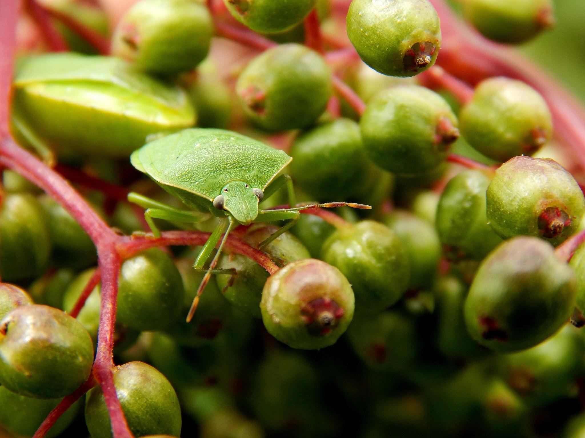 tree of greens by Bilja