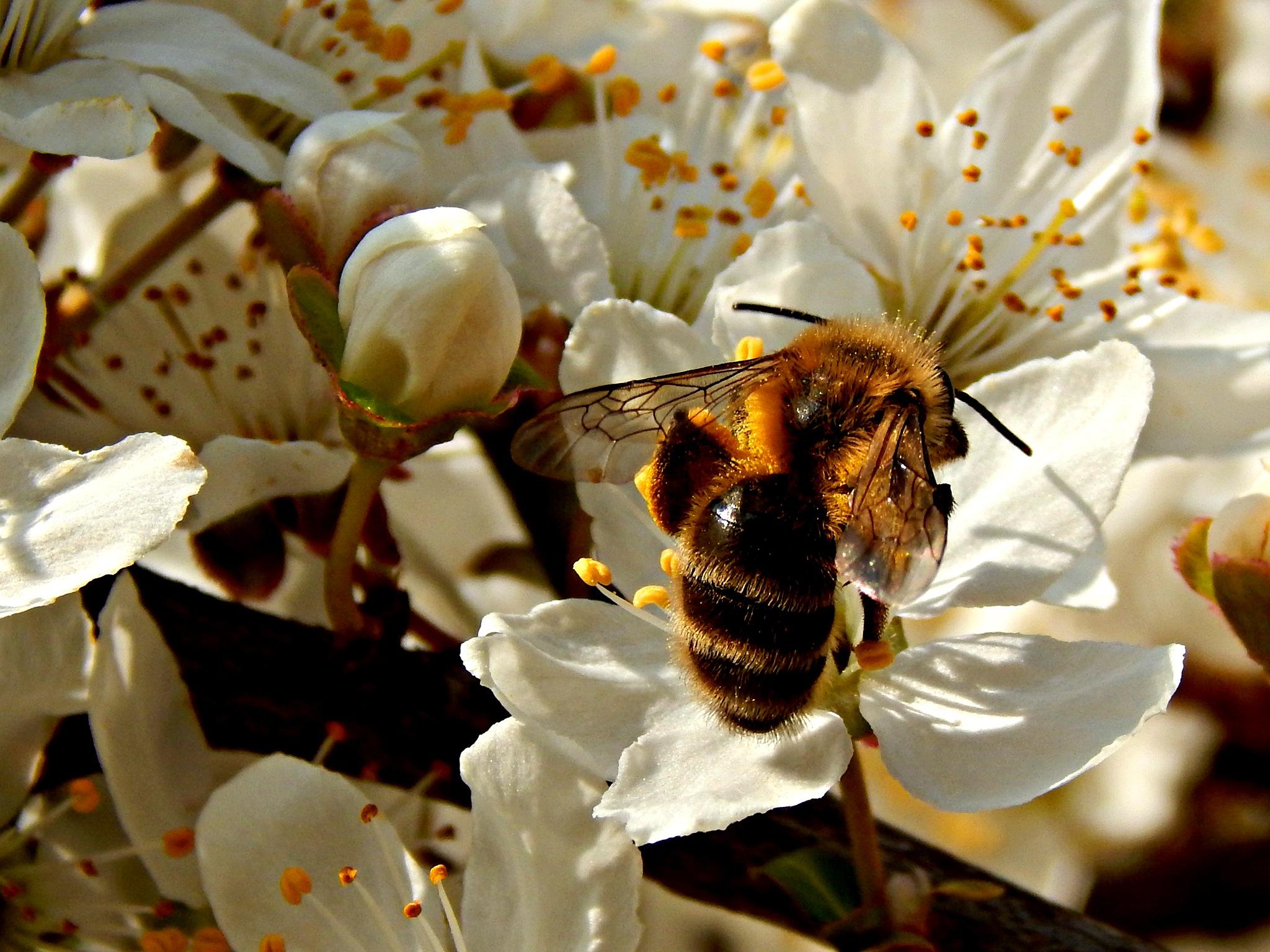 working bee by Bilja