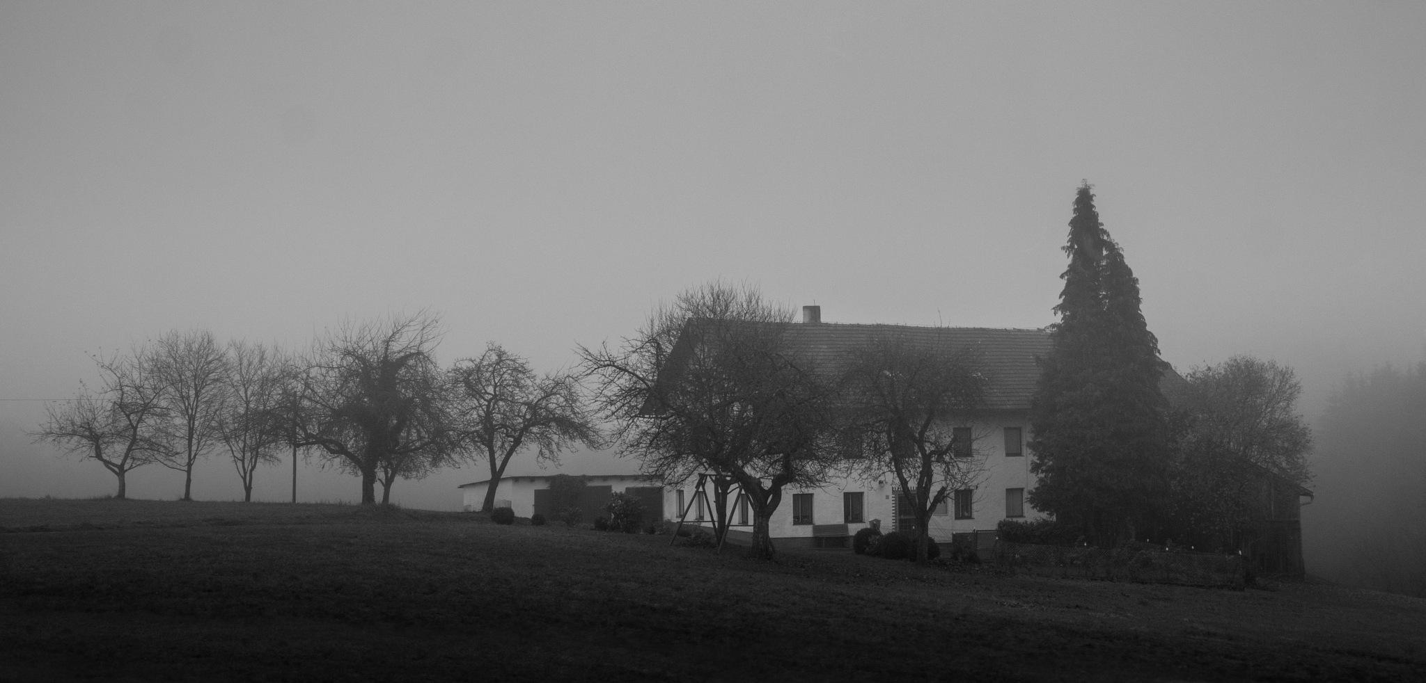 Bavaria Fog by Adam Weh ☂