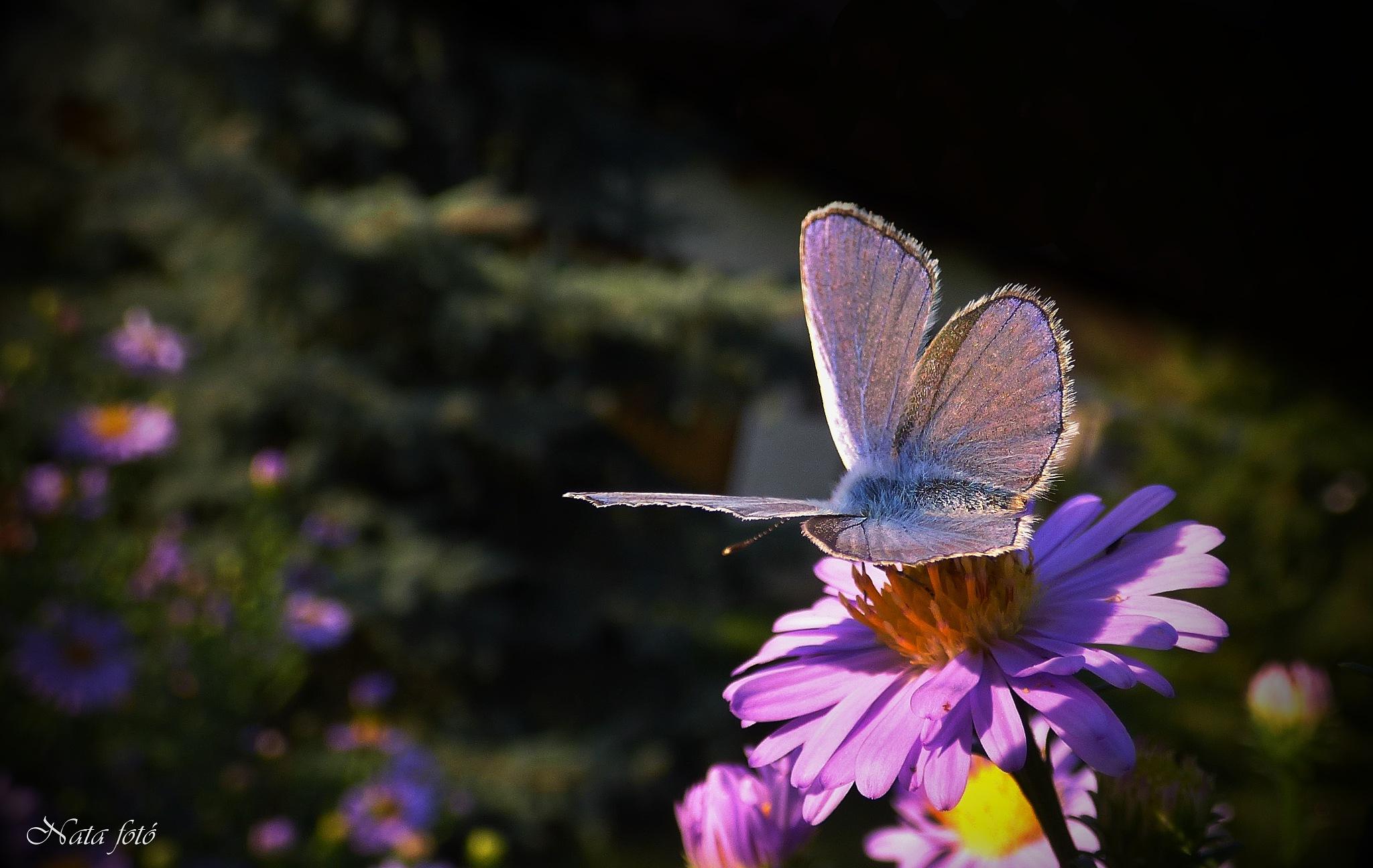Blue Beauty by Nata