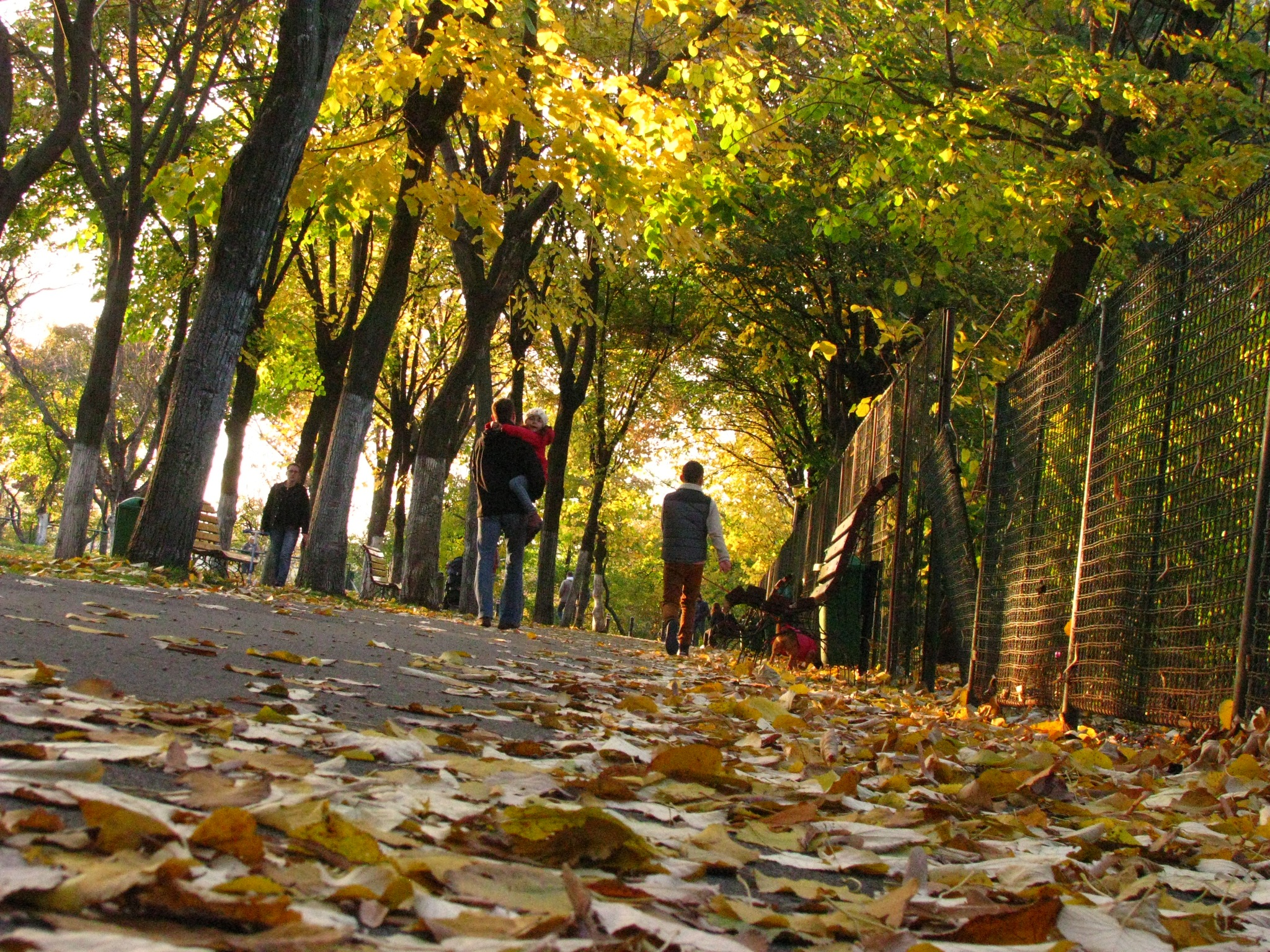 Beautiful autumn time in Bucharest, Romania ! by Elena Maria
