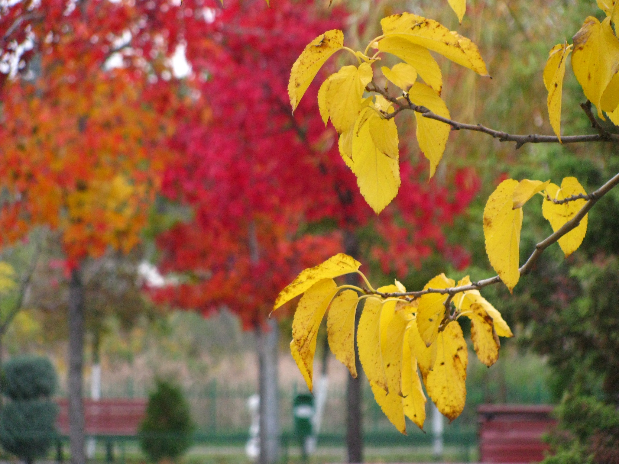 Autumn colours in Bucharest, Romania by Elena Maria
