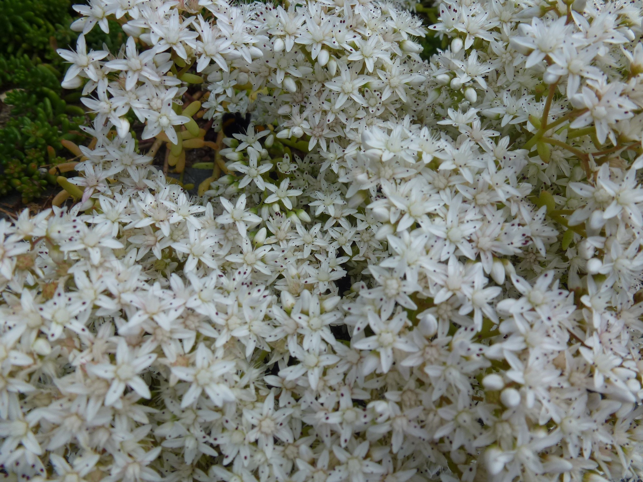 Little White Flowers ! by Mara1