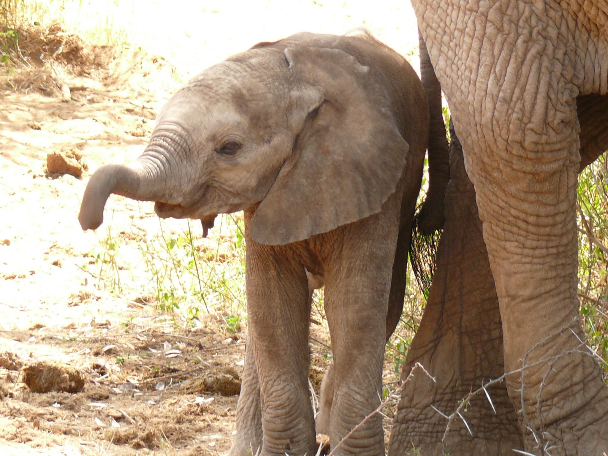 Baby Elephant ! by Mara1