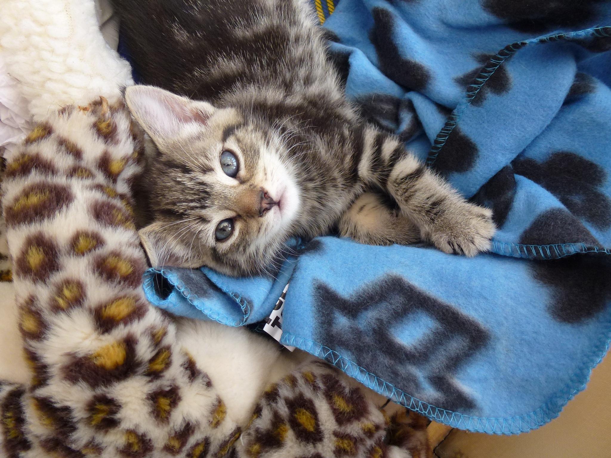 Baby Kitten ! by Mara1