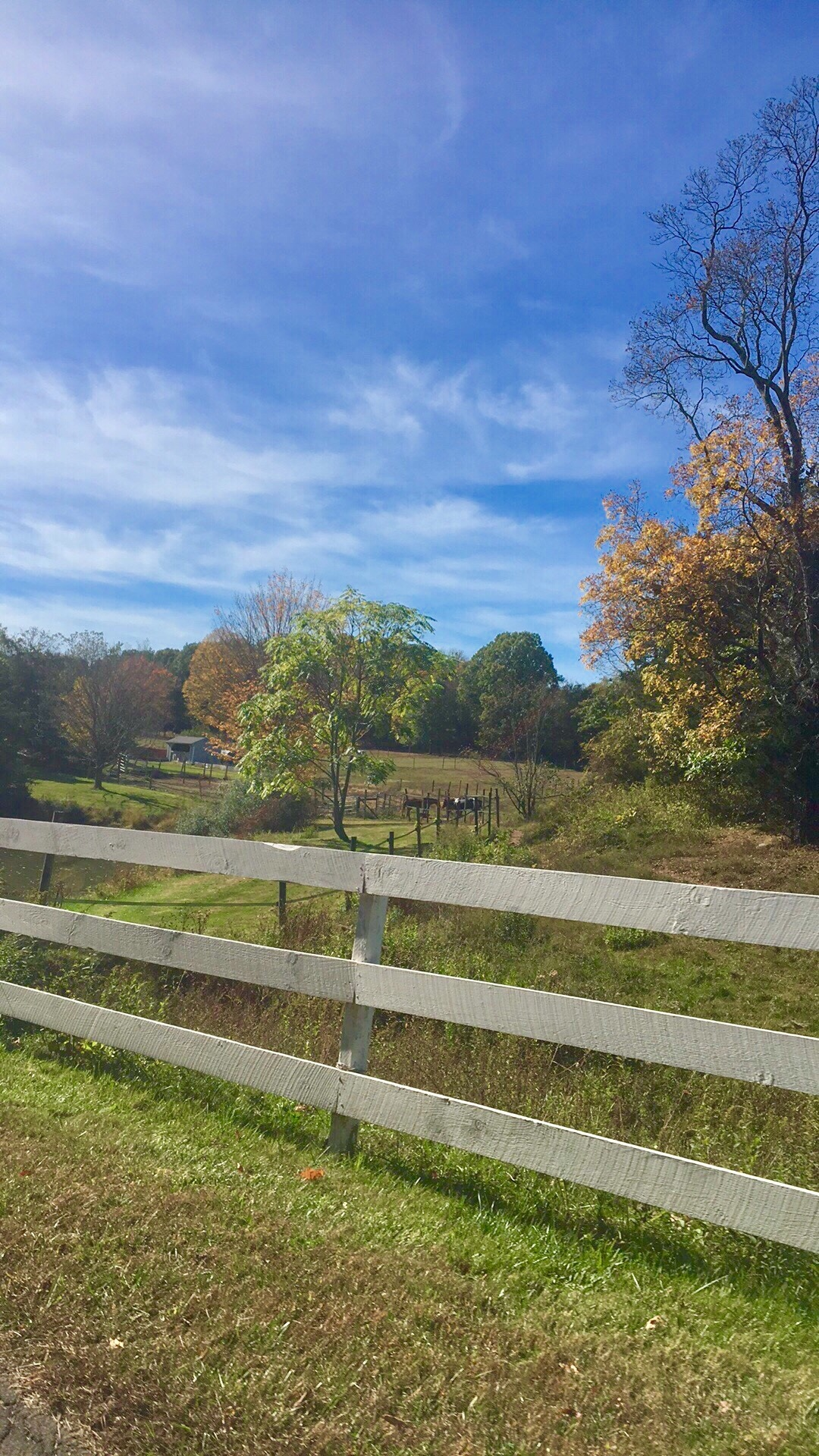 Autumn in Connecticut  by DonnaFuller