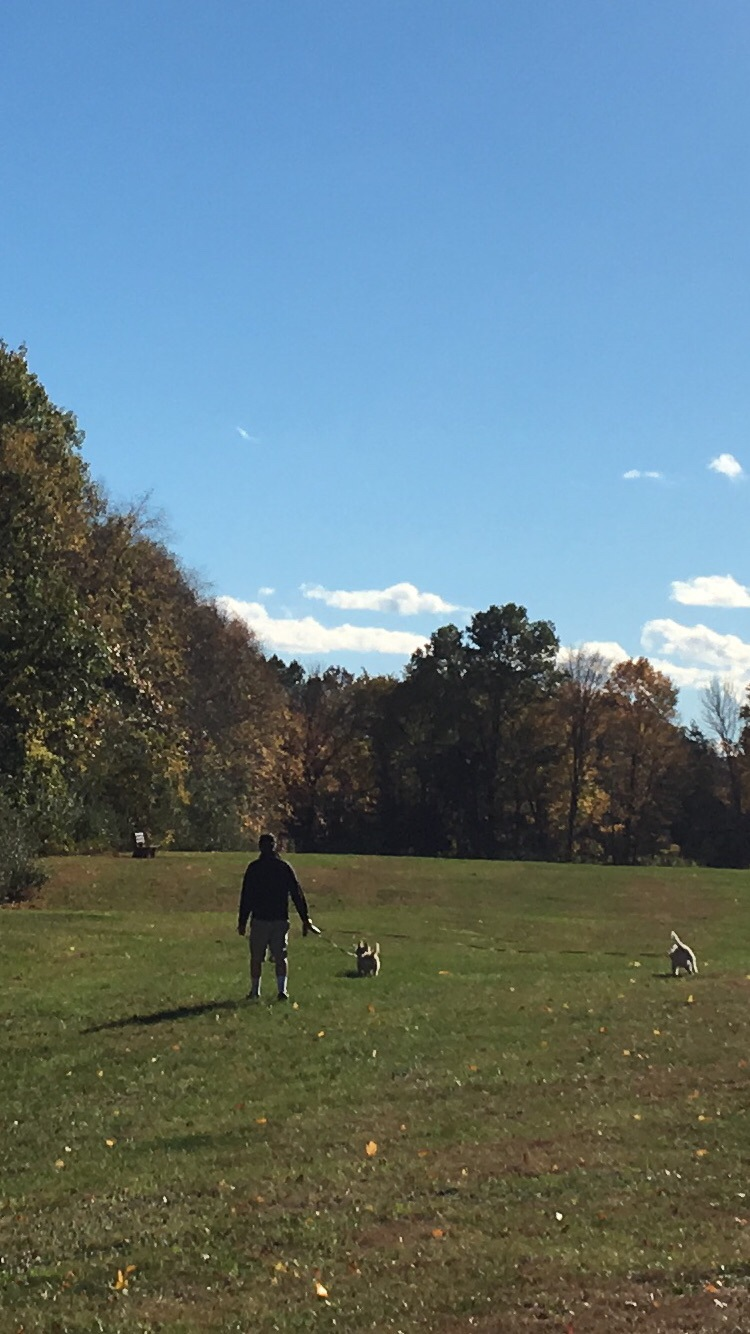 Man with dogs by DonnaFuller