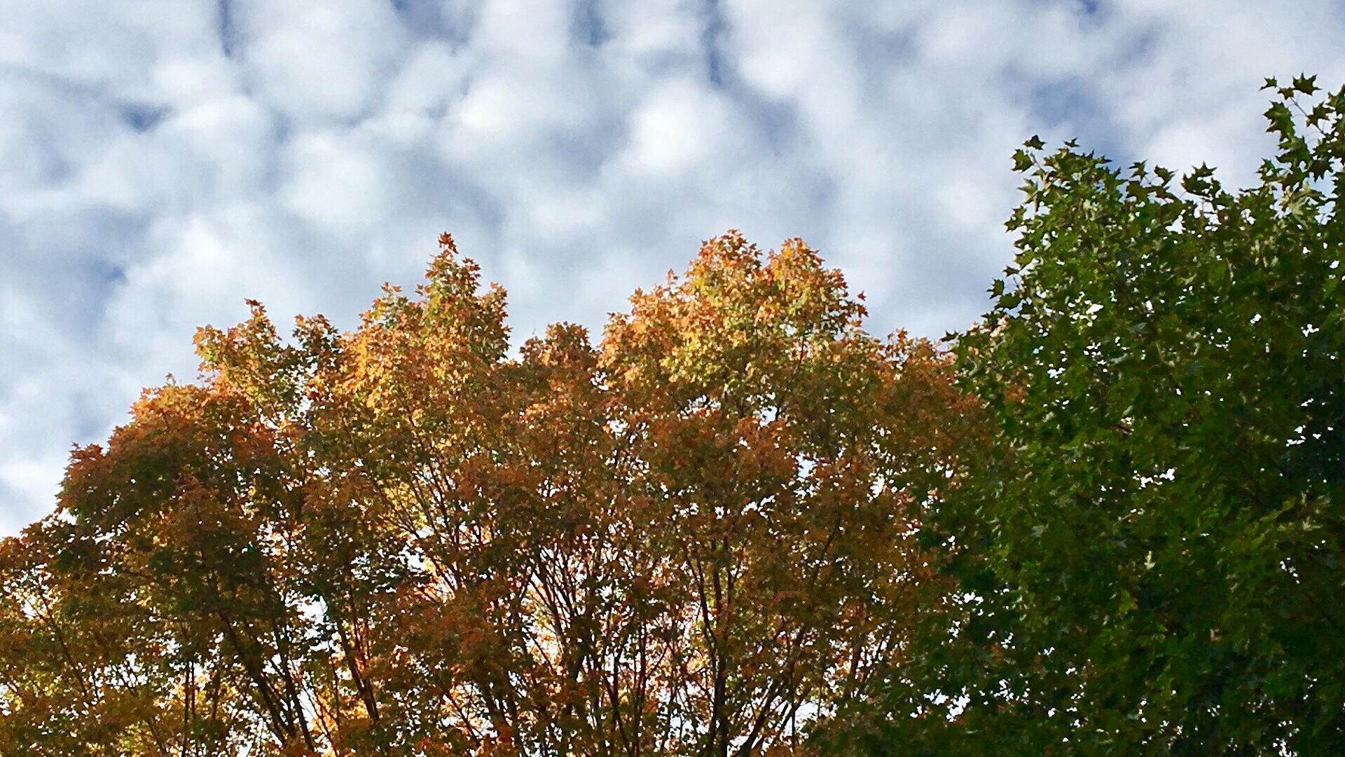 Autumn sky by DonnaFuller