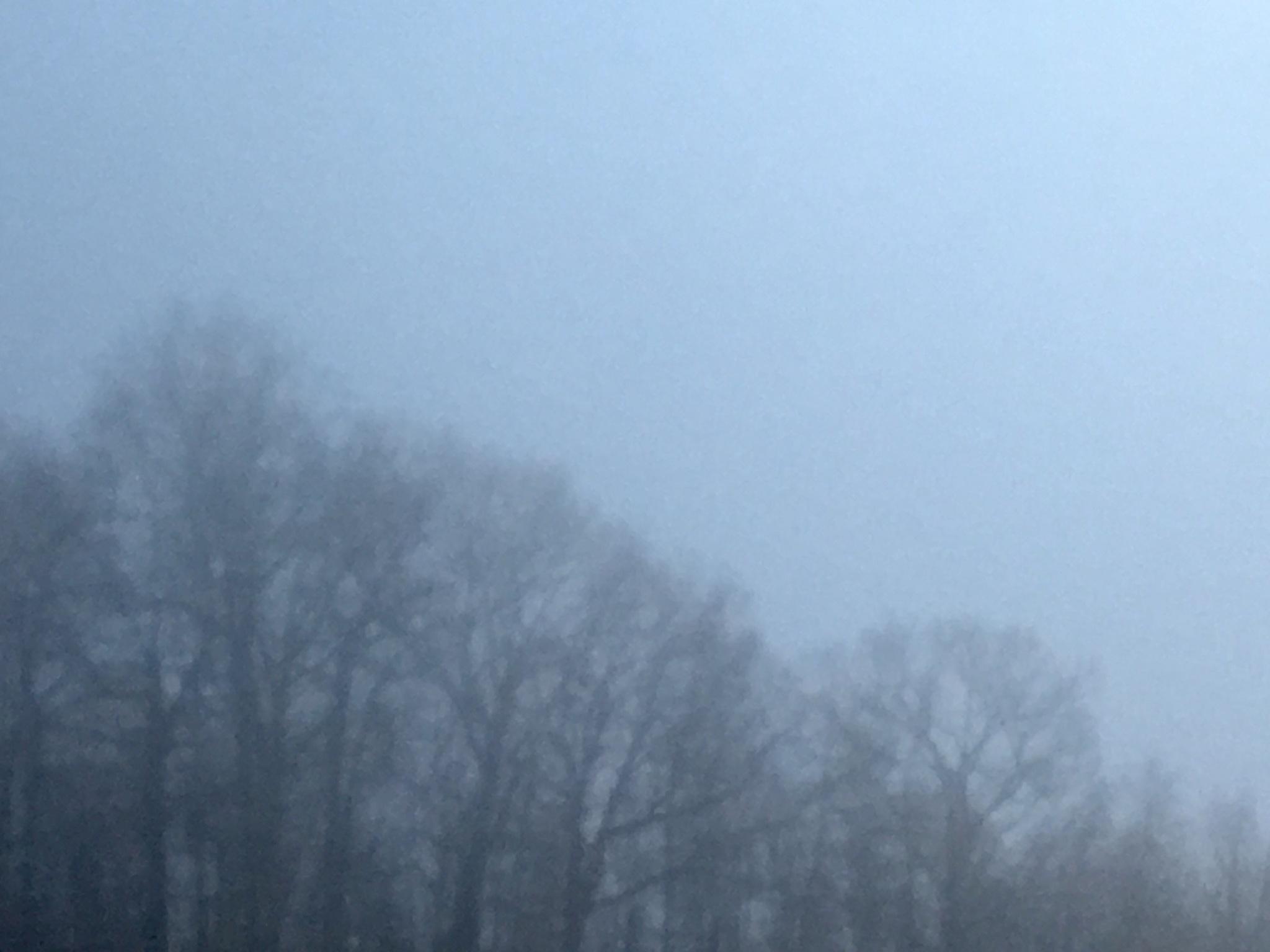 Mist by DonnaFuller