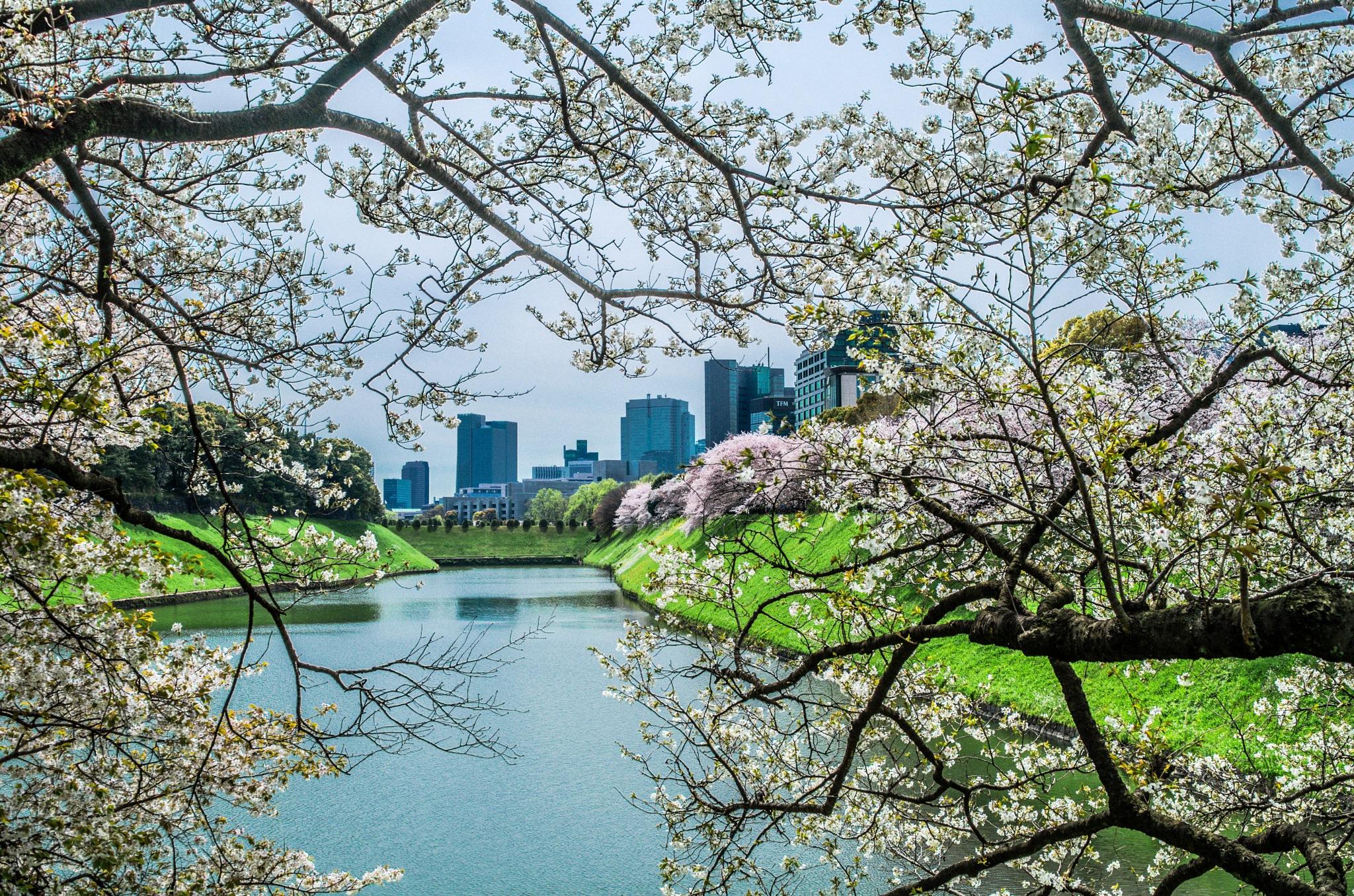 Sakura time by rudragos