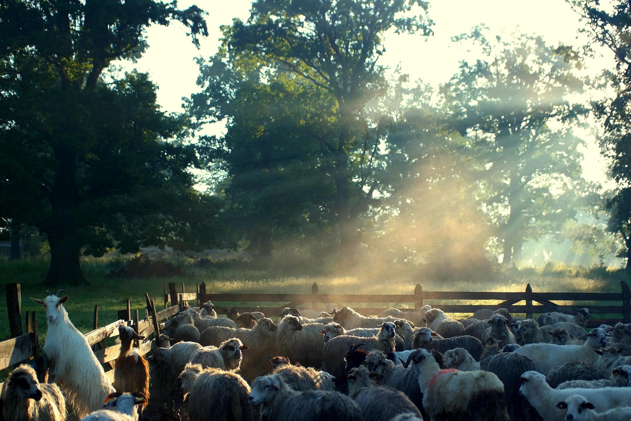 lighting sheepfold by rudragos