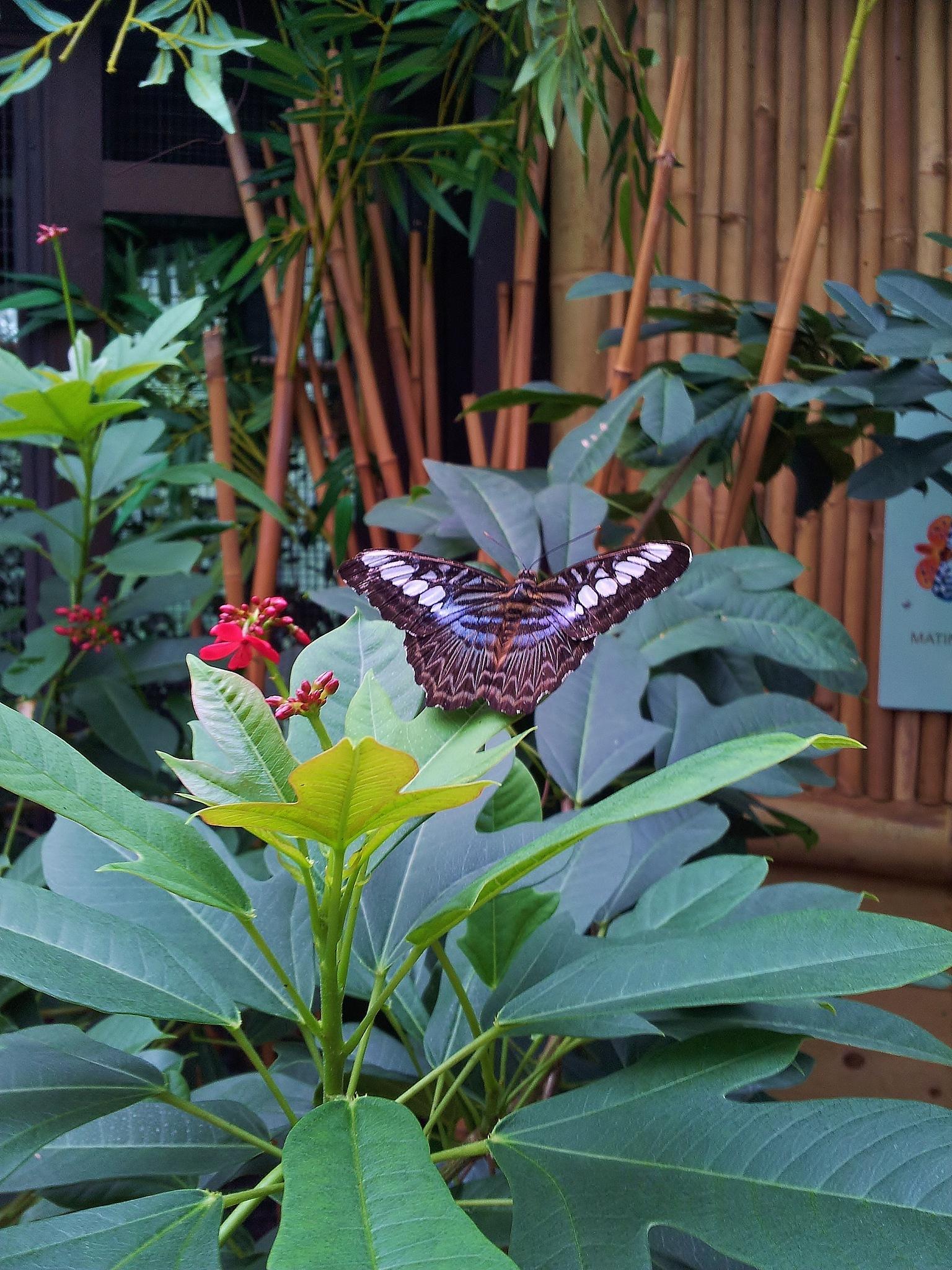 Butterfly conservatory by Jessy La