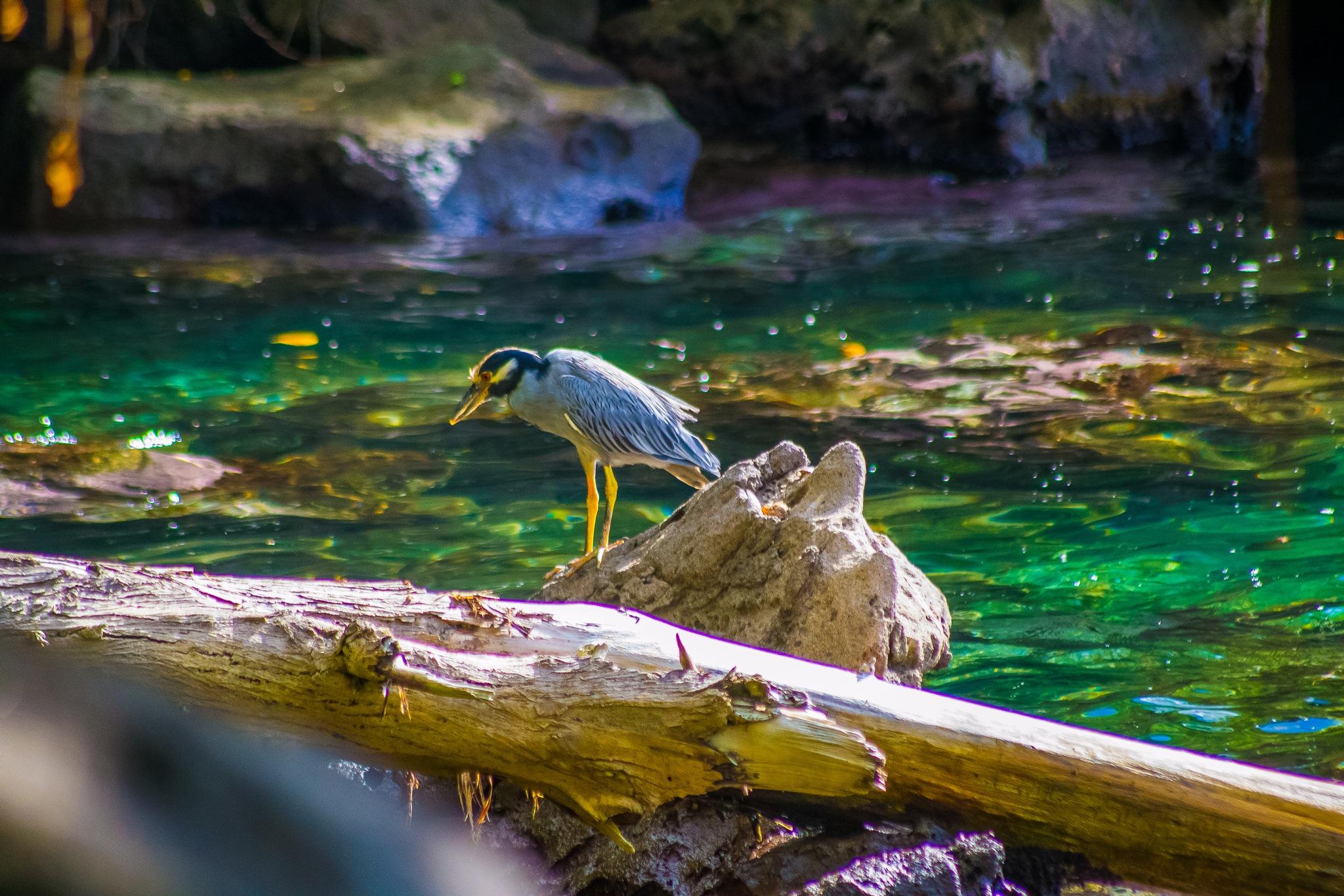 hunting Season by Raoul Weekes Photography®