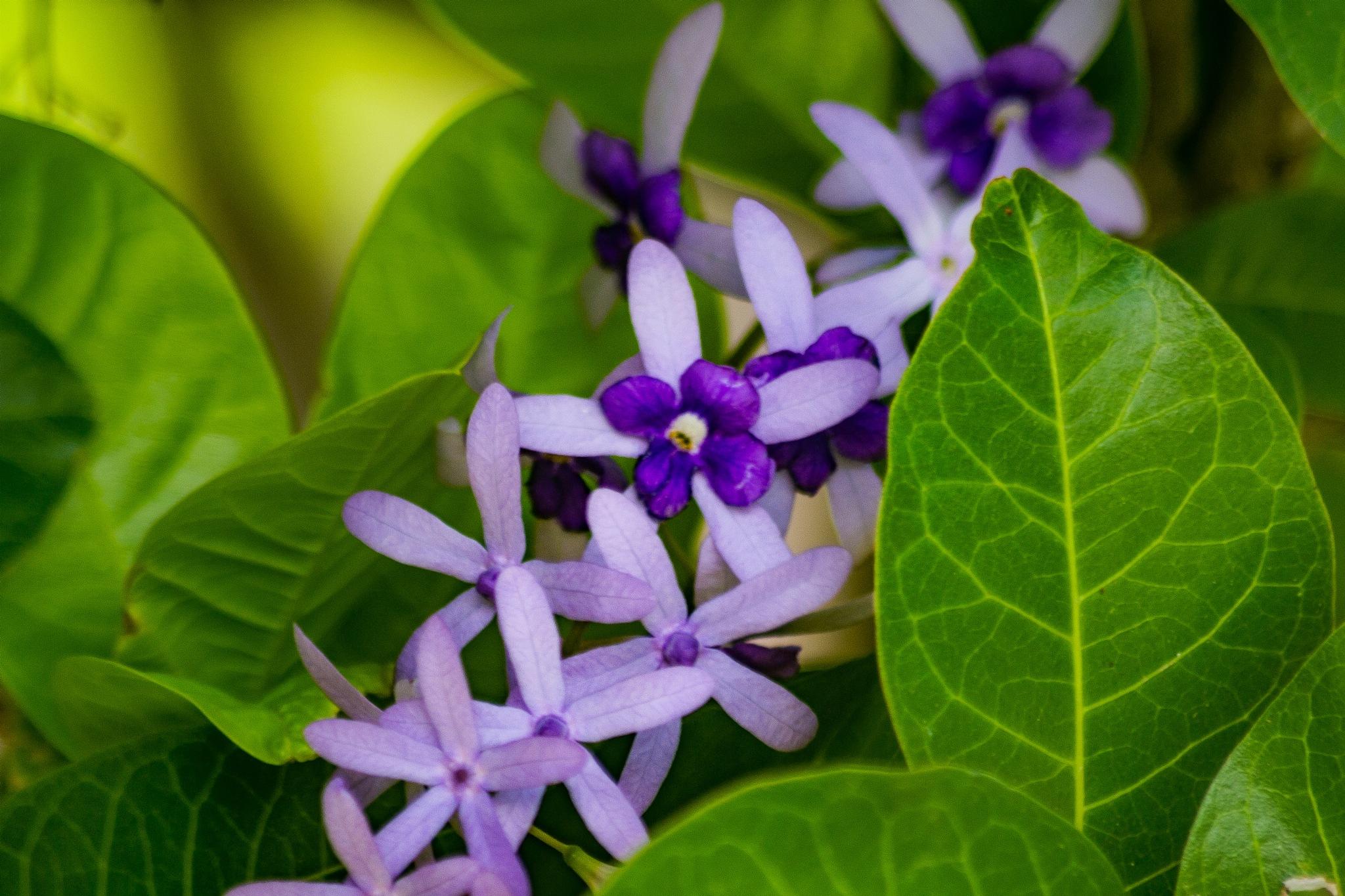 Nature Creates - Botanical by Raoul Weekes Photography®