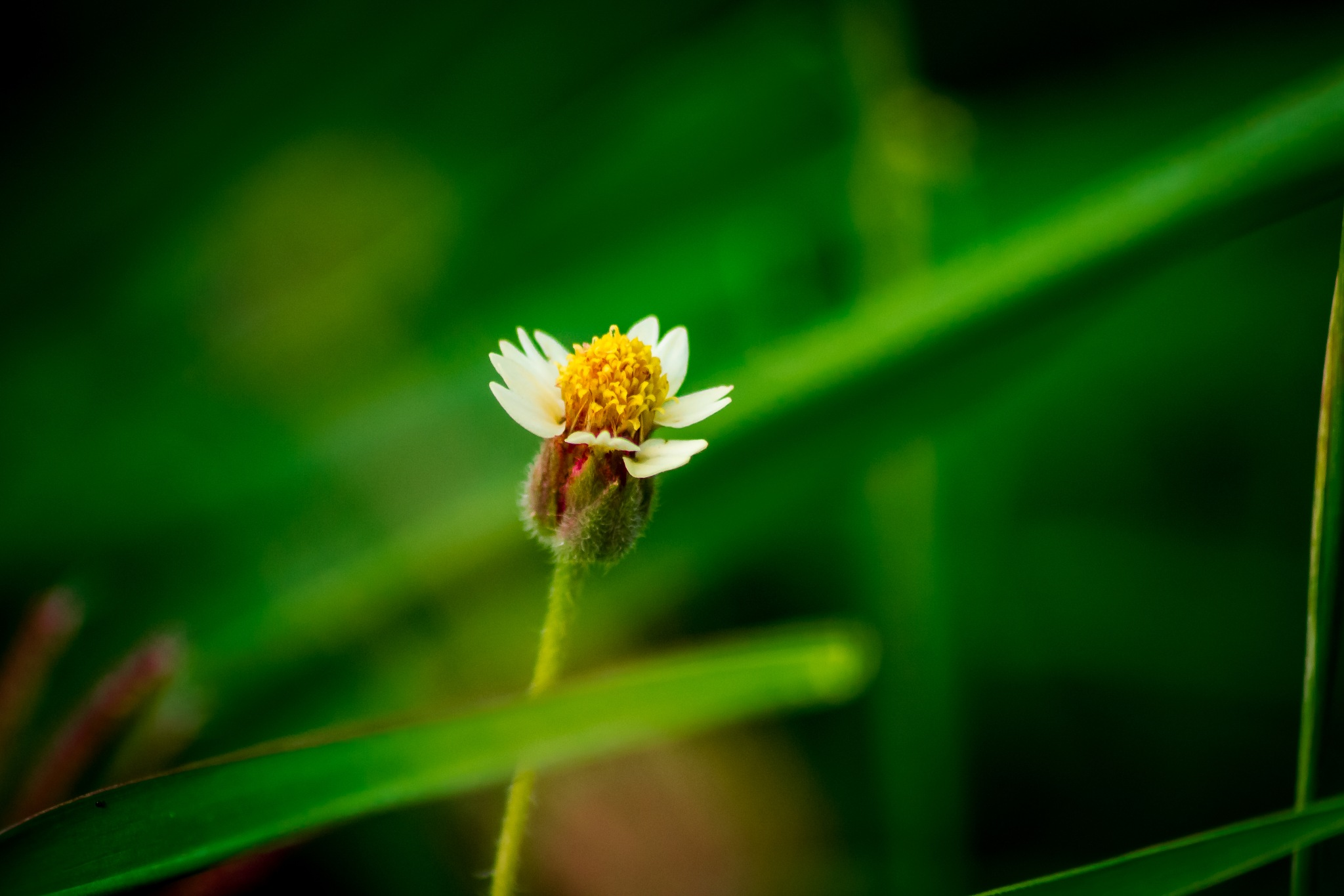 Bee Grass by Raoul Weekes Photography®