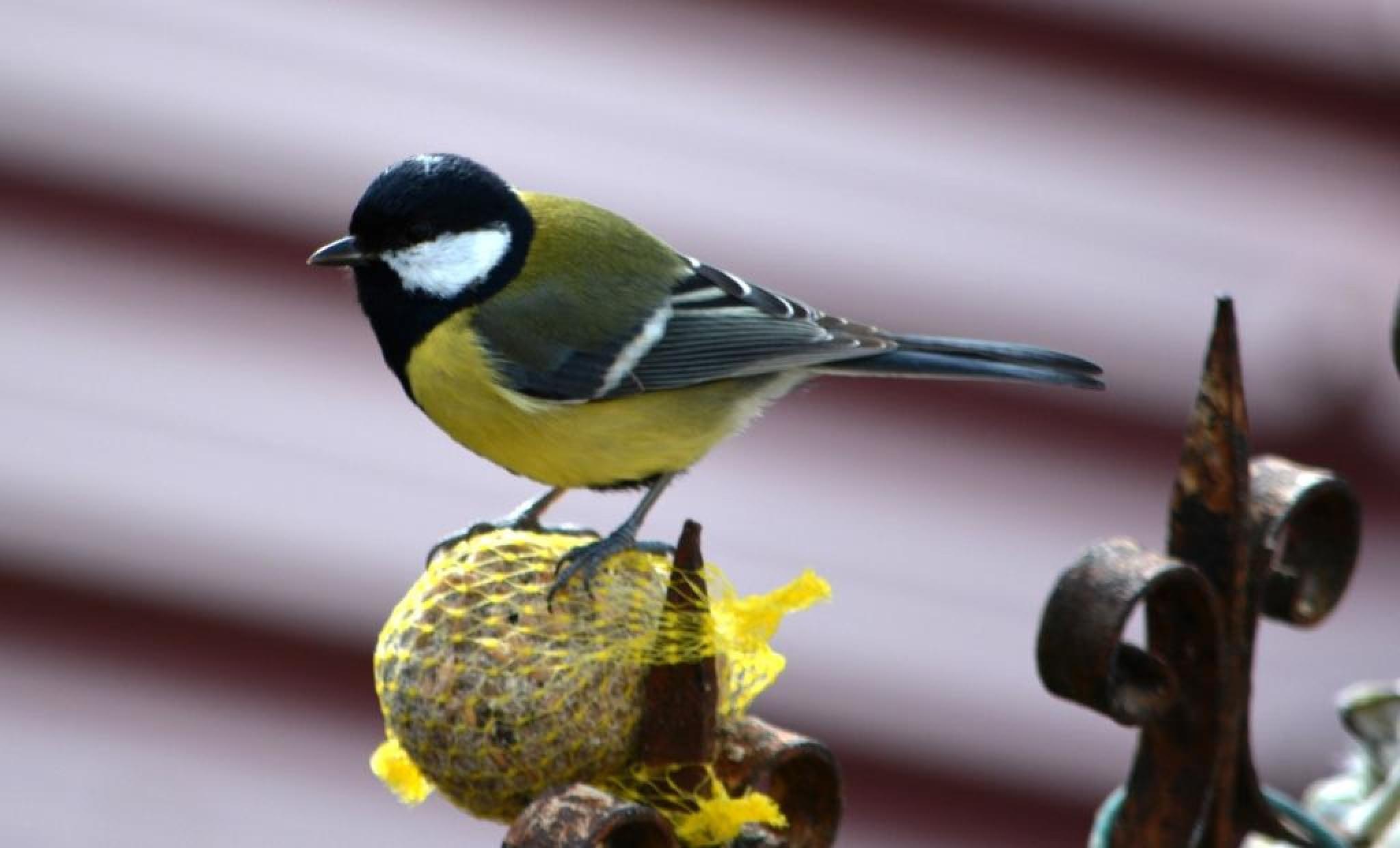 Feeding the wild birds by alison16