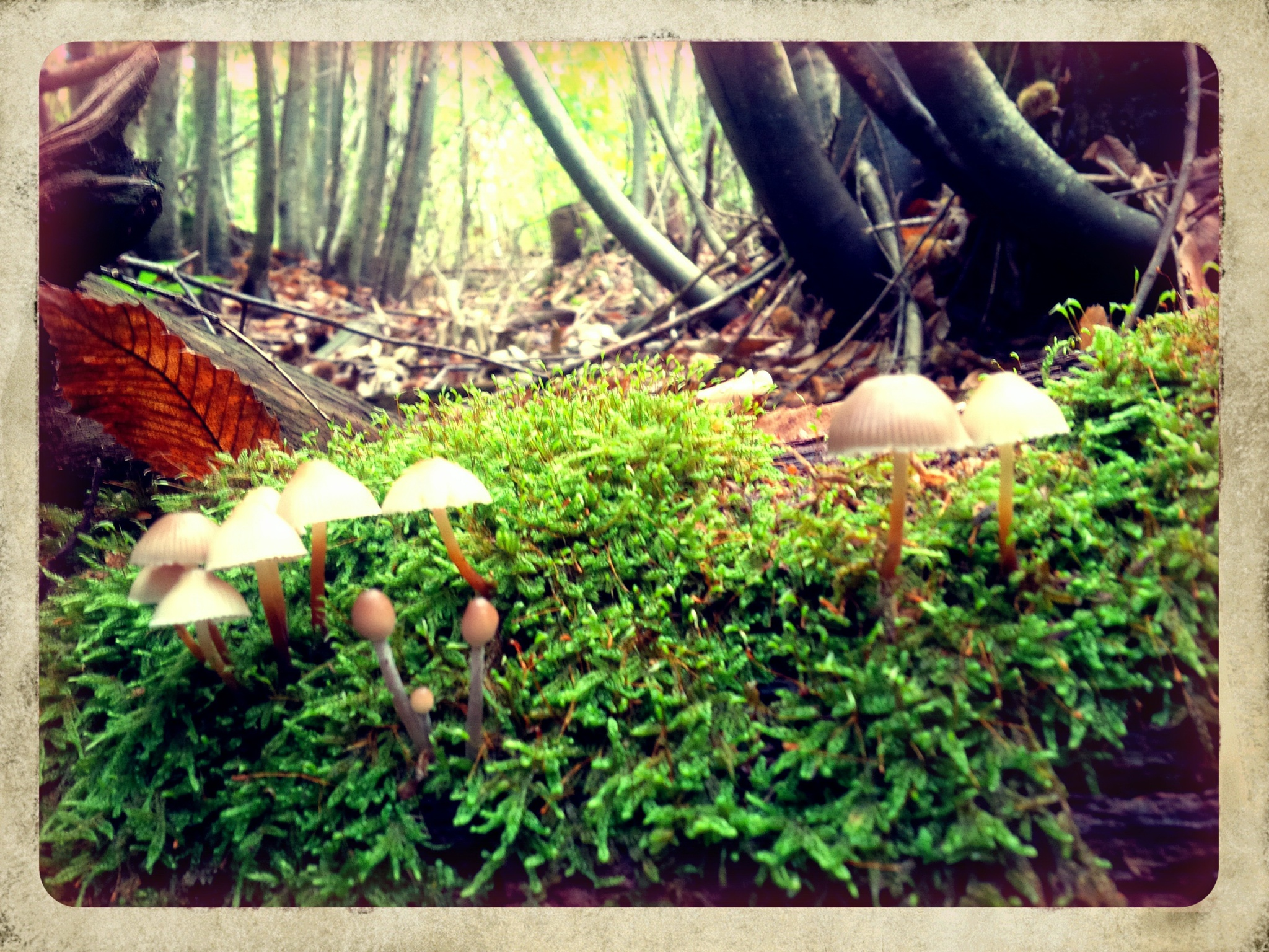 Fairy Toadstools by alison16