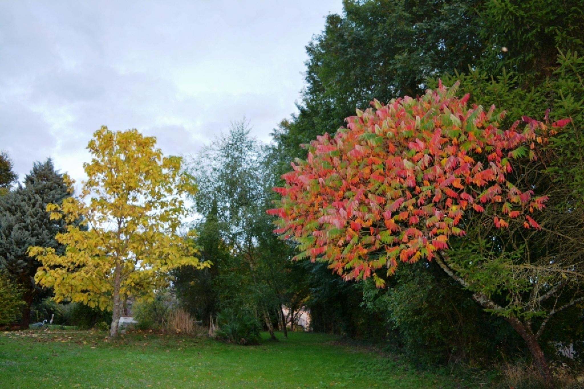 Autumn colours by alison16