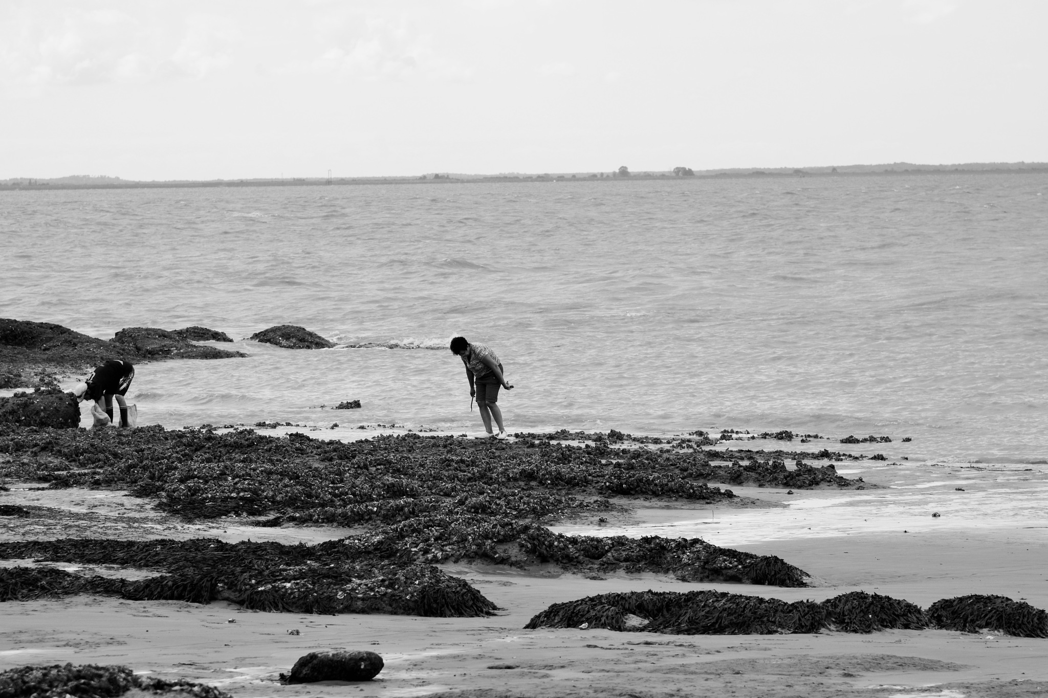 Shellfish gathering at extra low tide! by alison16