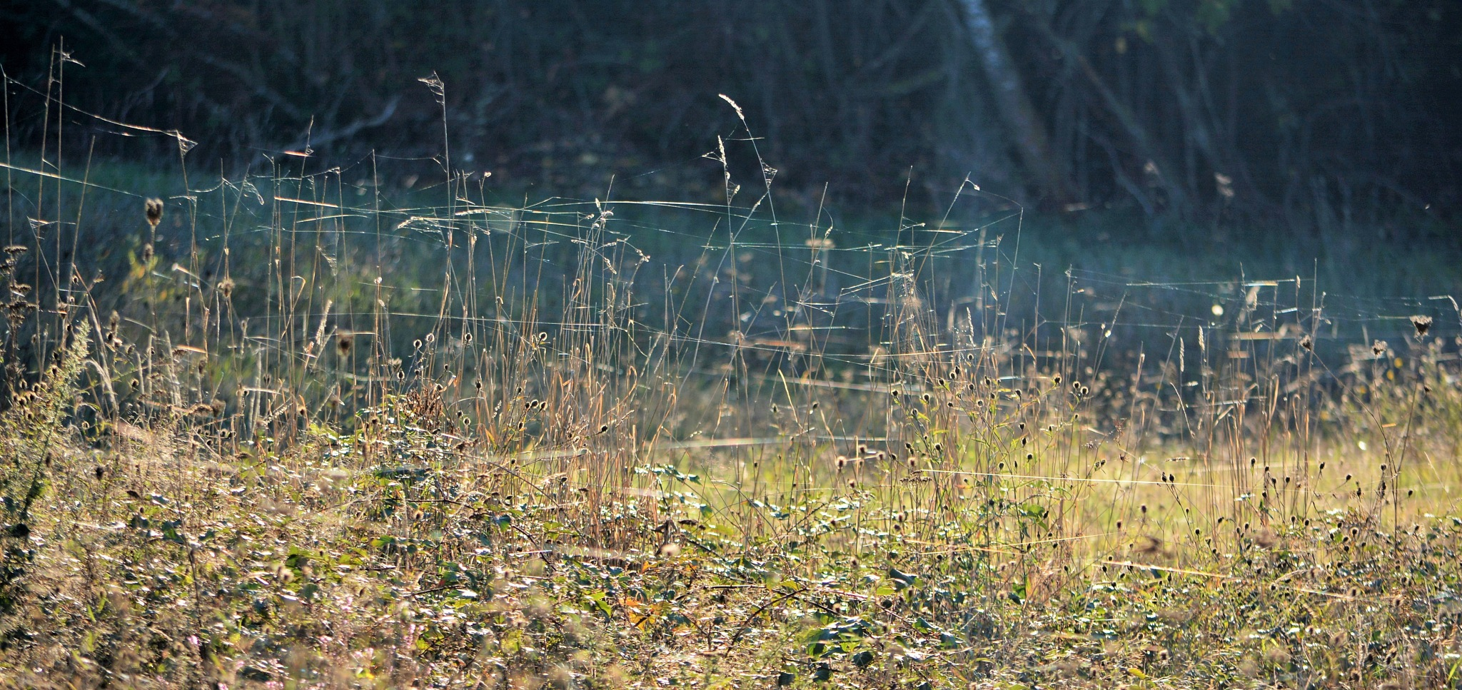 Spider's webs in the grass! by alison16