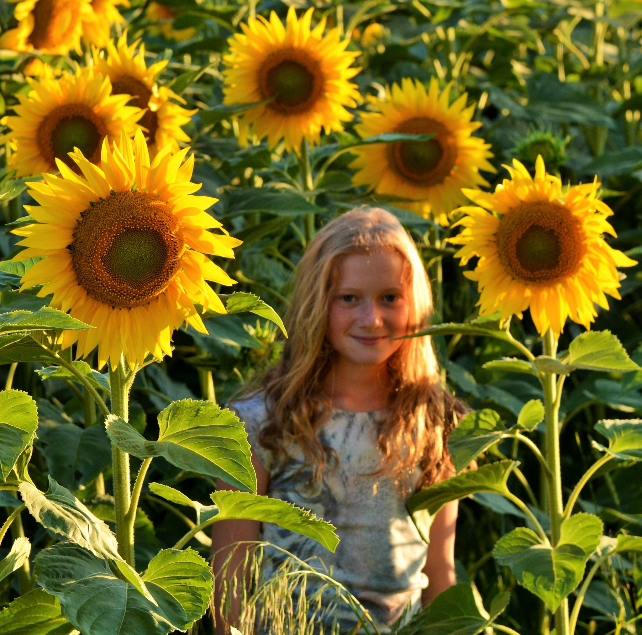 Girl among the sunflowers by alison16
