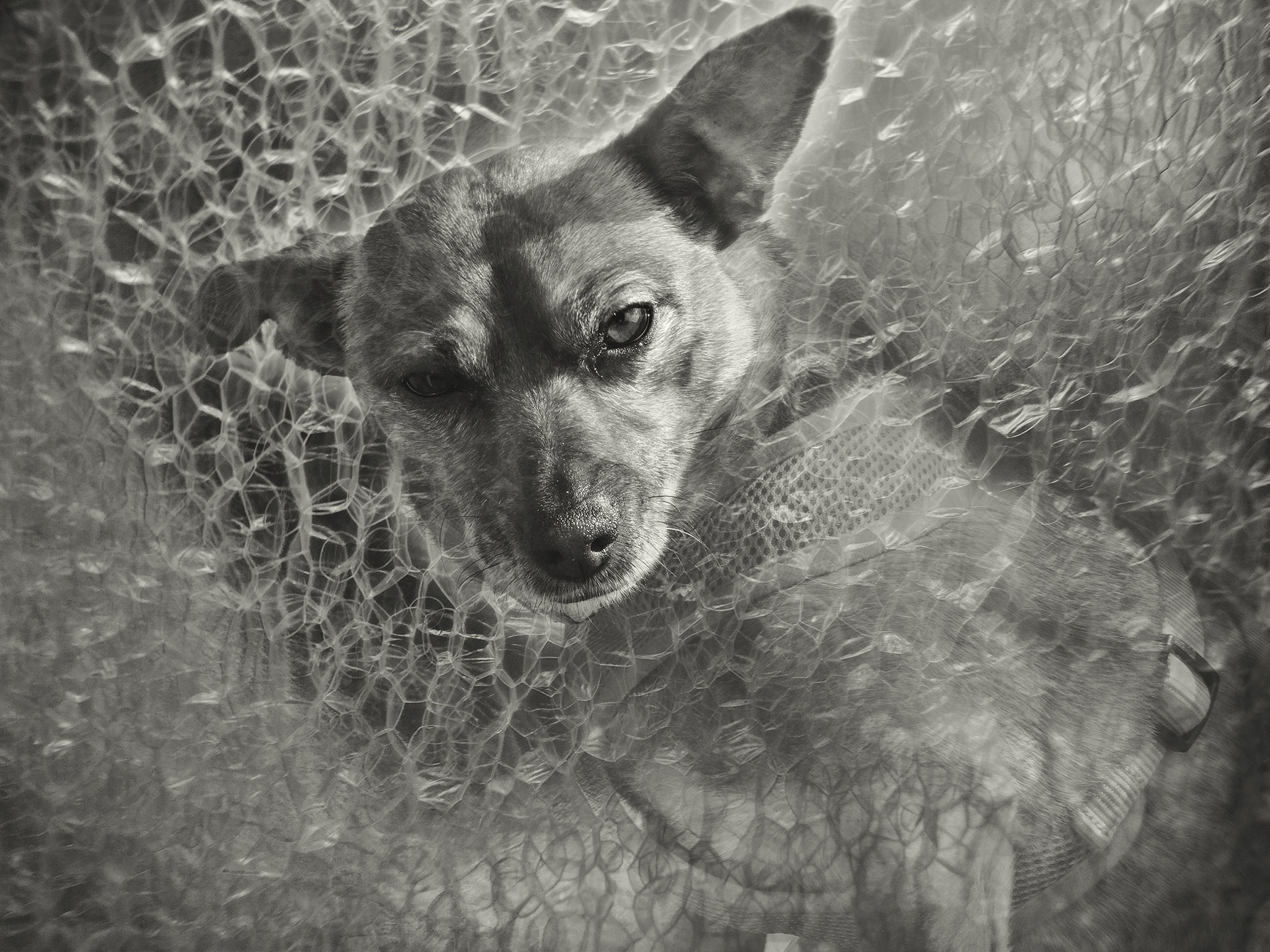 Doggly by shanetzu