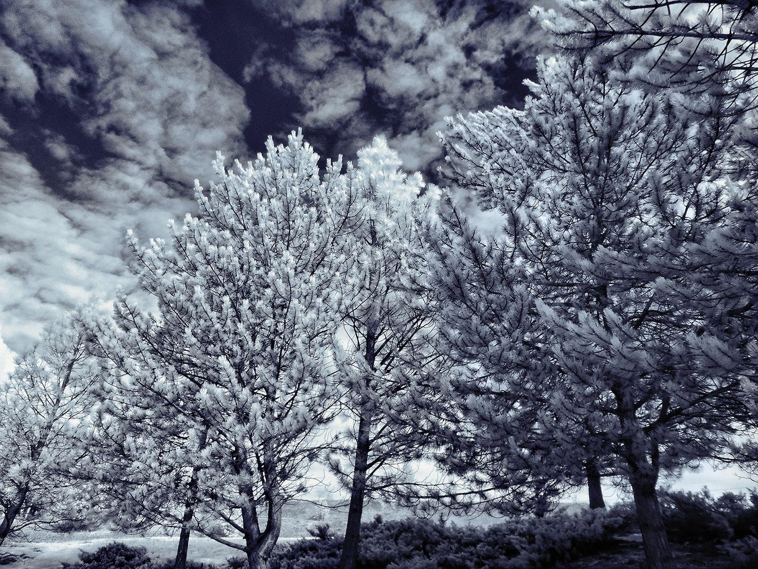 Winter Blues by shanetzu