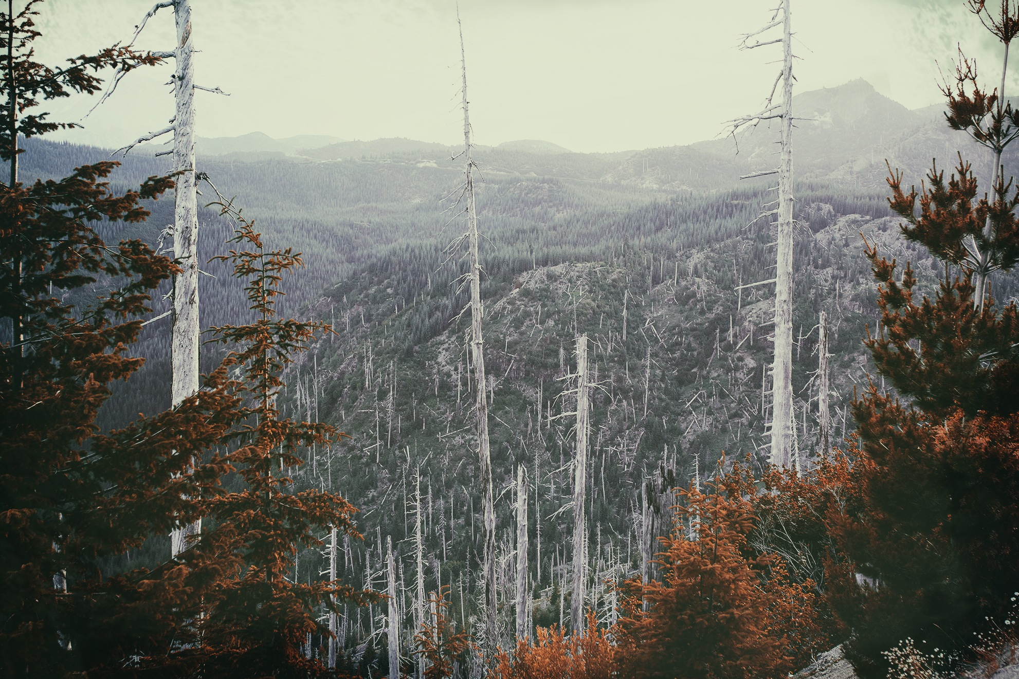 Destroyed Forest 1980 Mt. St. Helens Eruption by shanetzu
