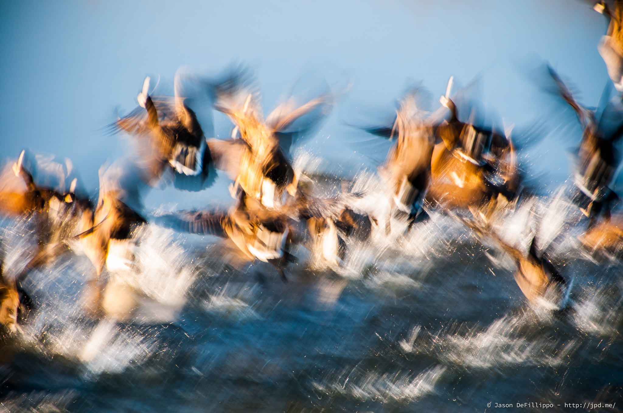 Geese Taking Flight by J.P.DeFillippo
