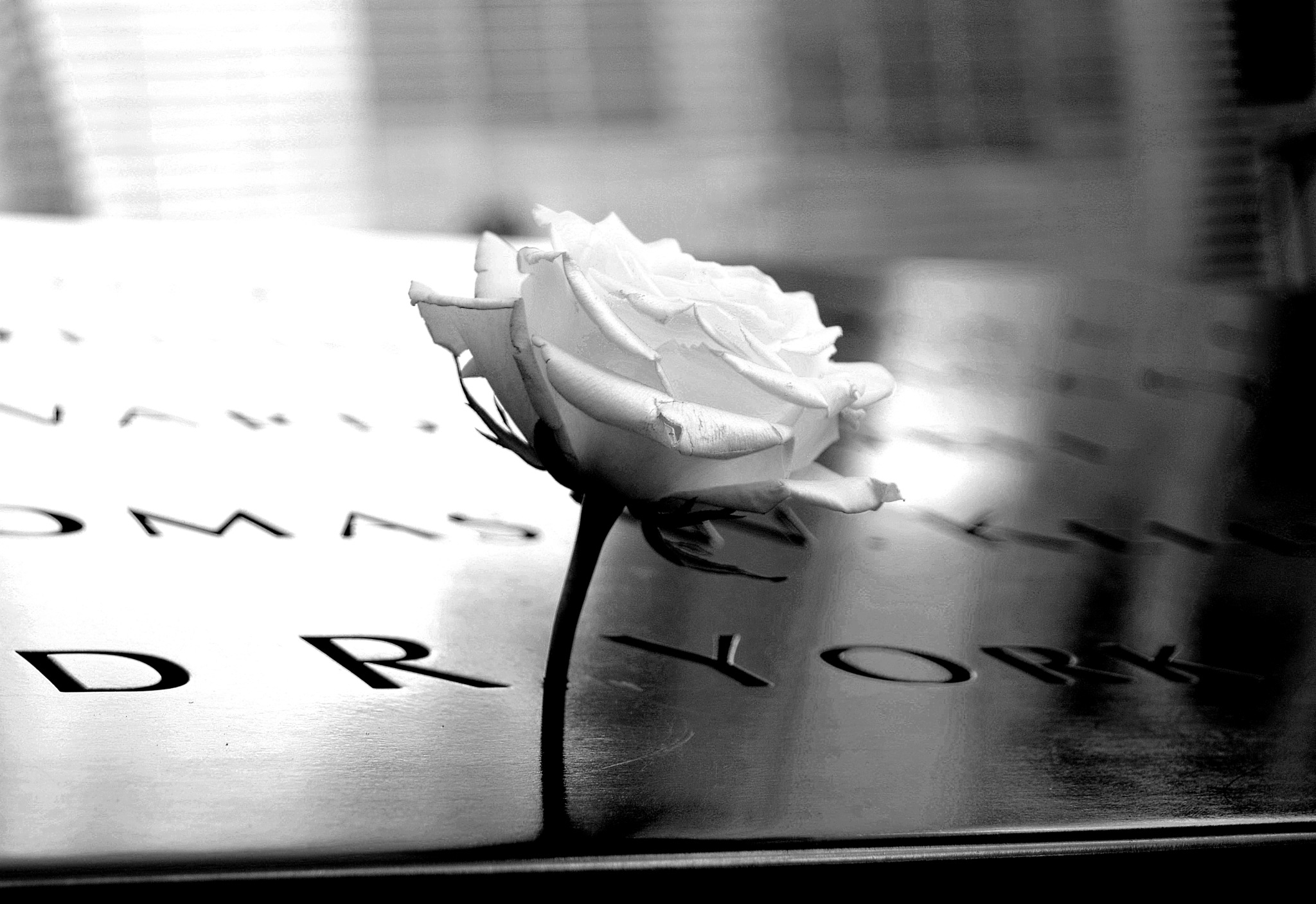 Mourning Flower at the 9/11 Memorial by PeterHaselstoner