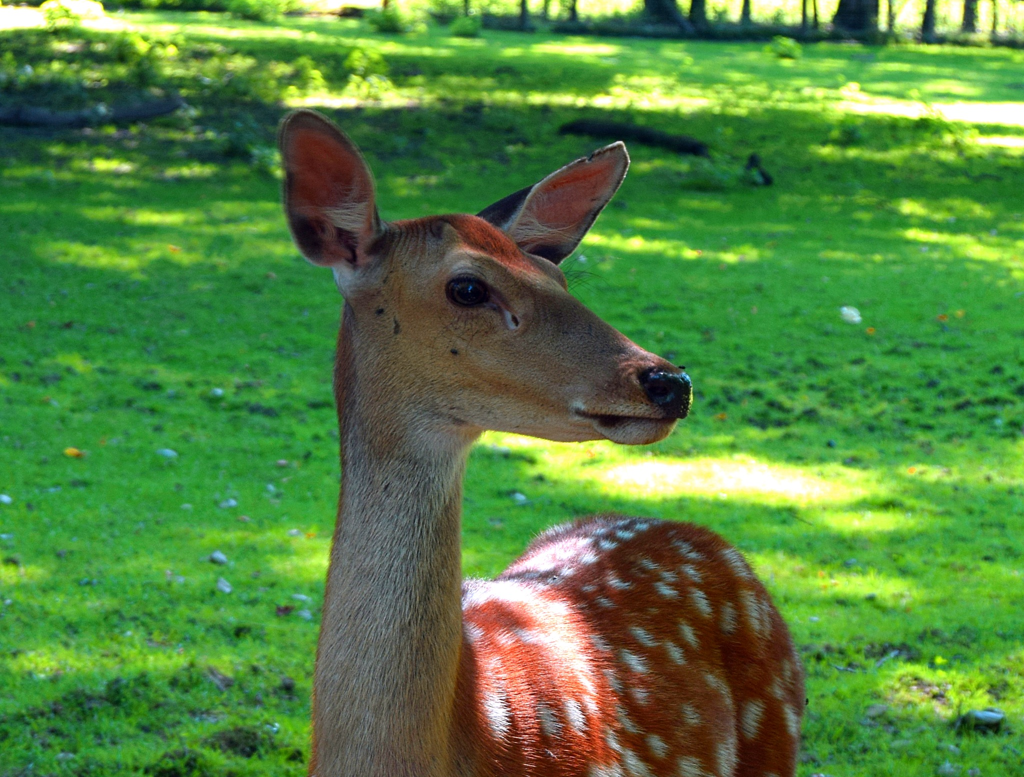 Deer pretty near by PeterHaselstoner