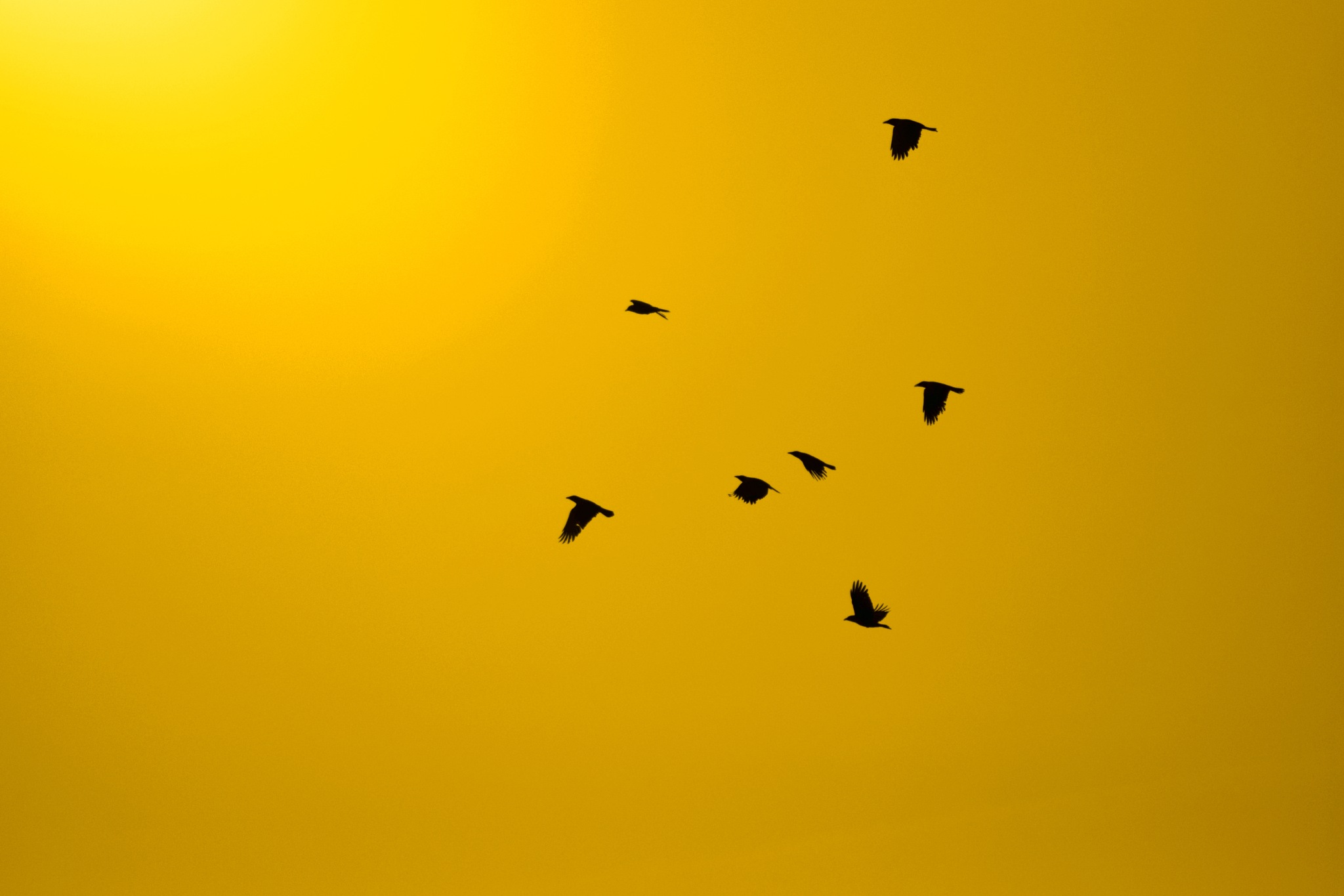 Birds flying into the Sunset by PeterHaselstoner