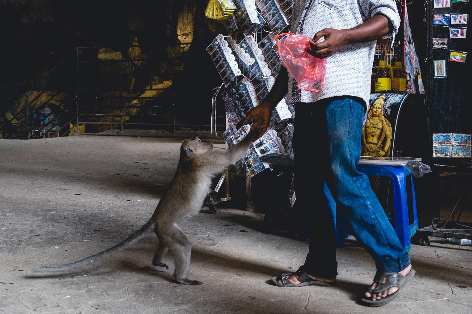 Man feeding monkey by Shah Shukri
