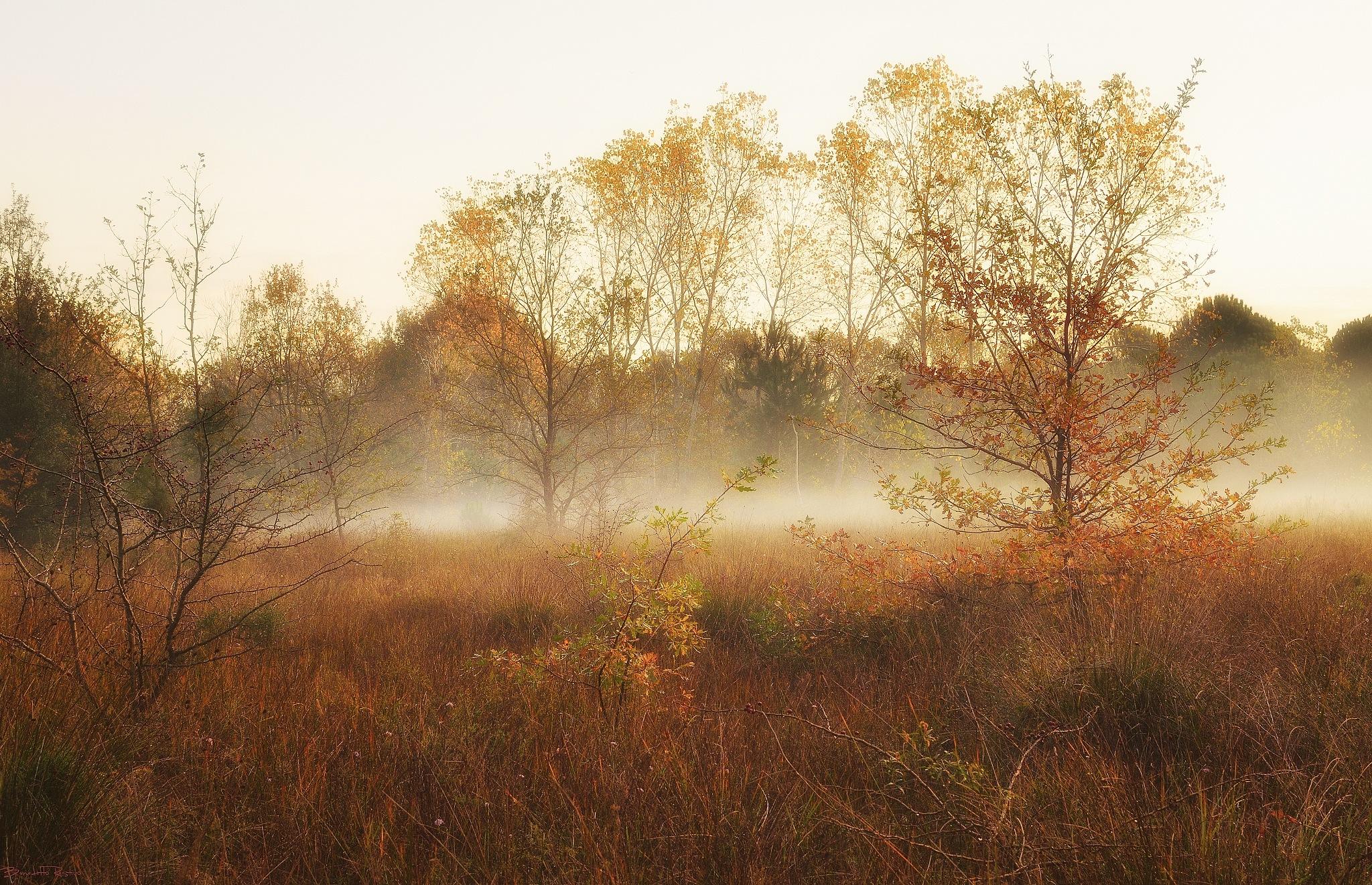 sfumature d'autunno..... by Benedetto Restivo