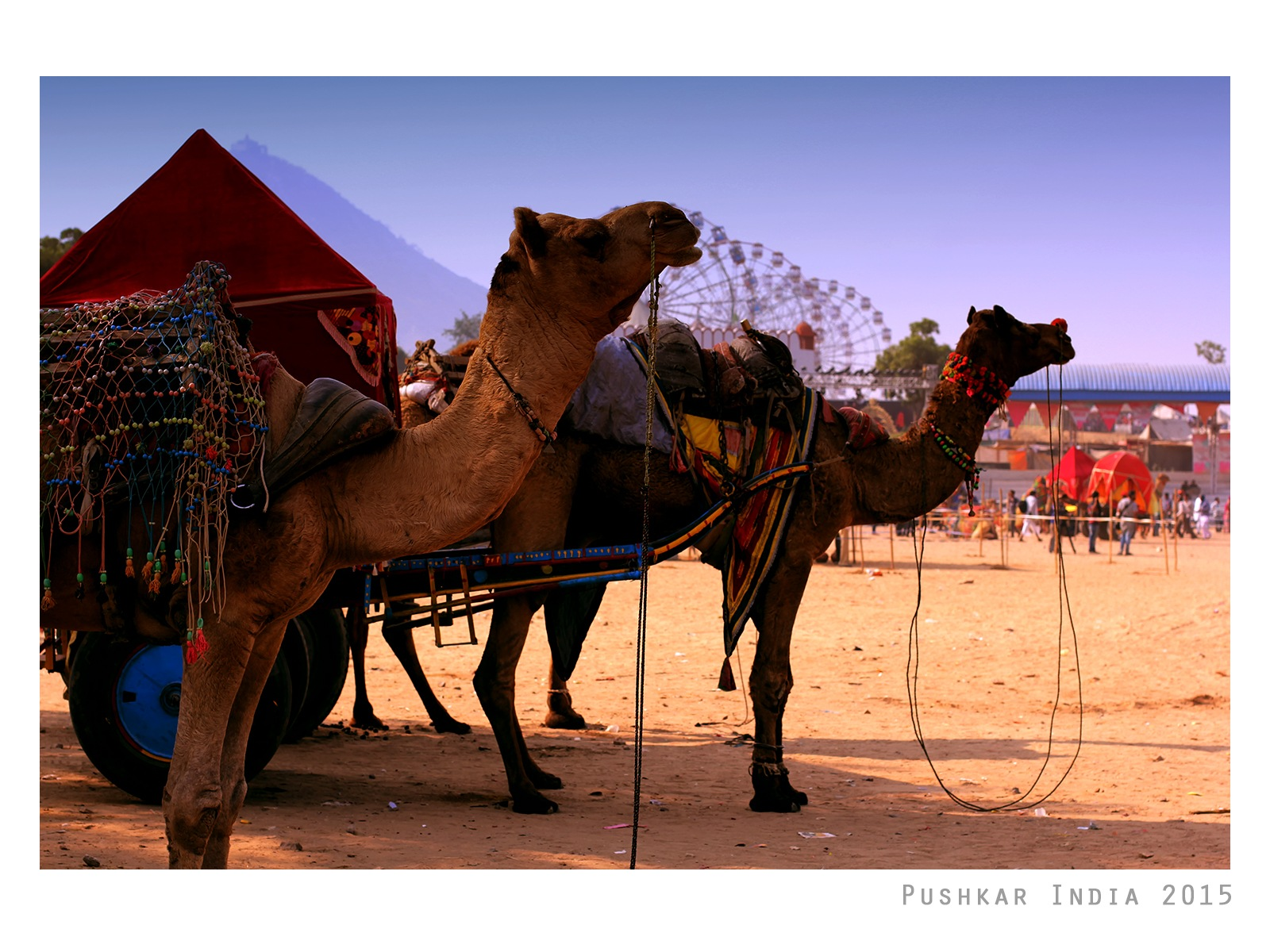 stand for camels by Amar Yadav