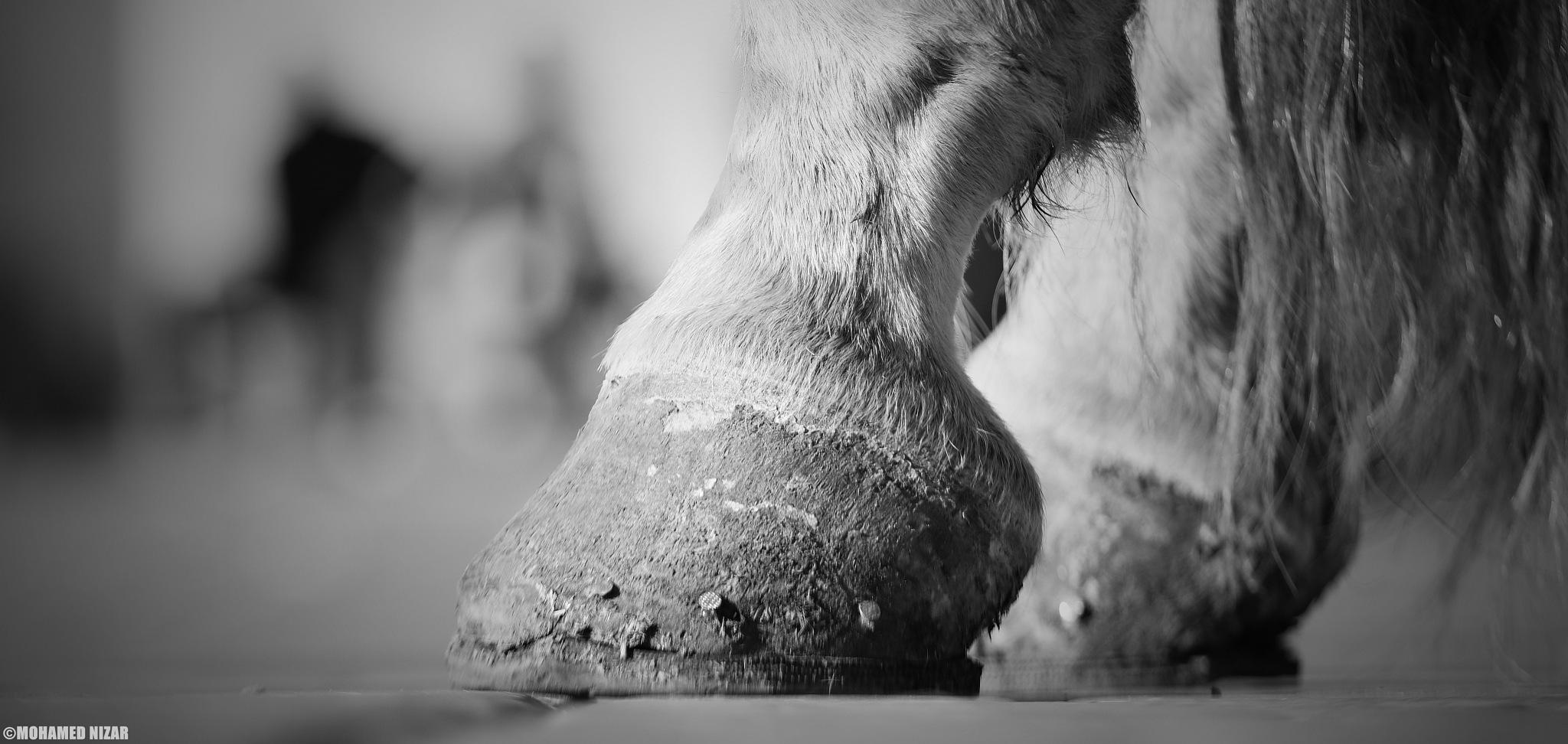 Feet by Mohamed Nizar Photography