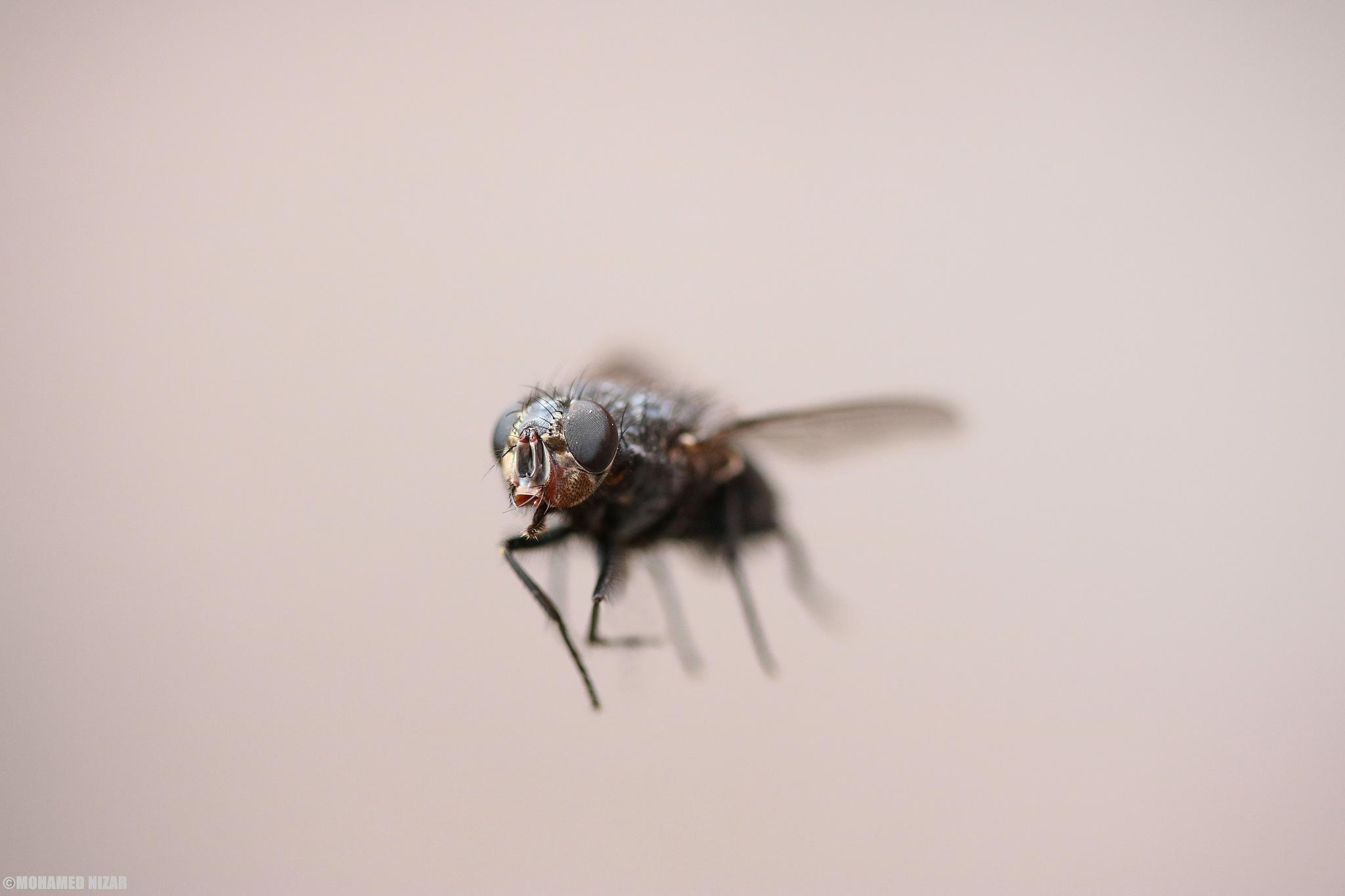 Fly by Mohamed Nizar Photography