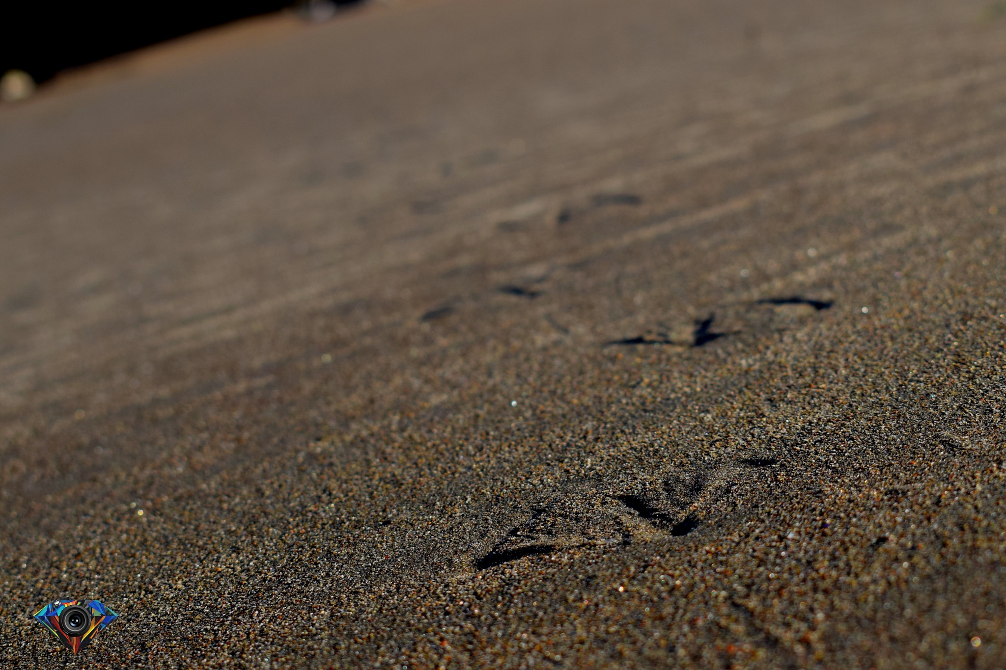 sand by Tamm Hughes