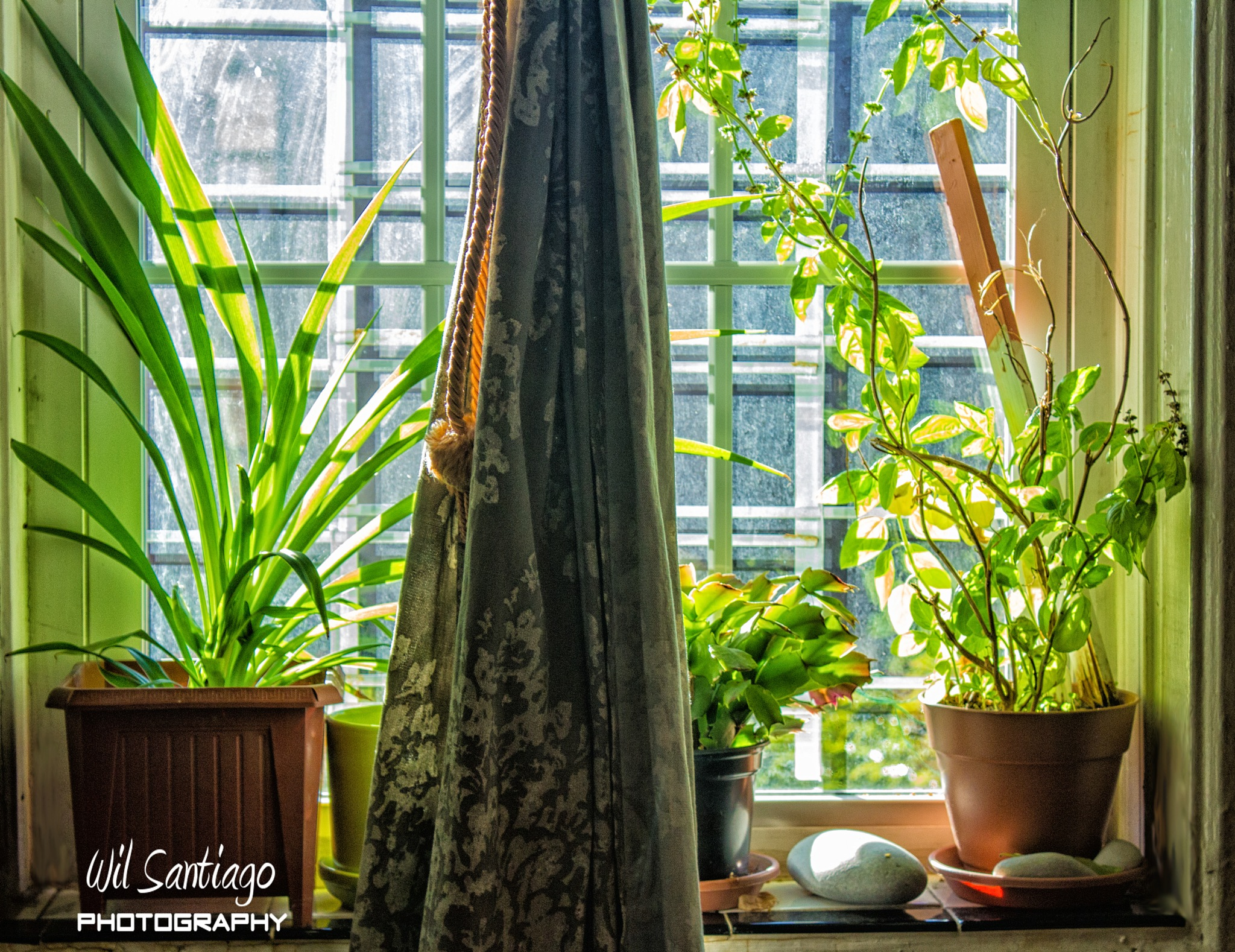 Plants on the Window 2 by WilSant