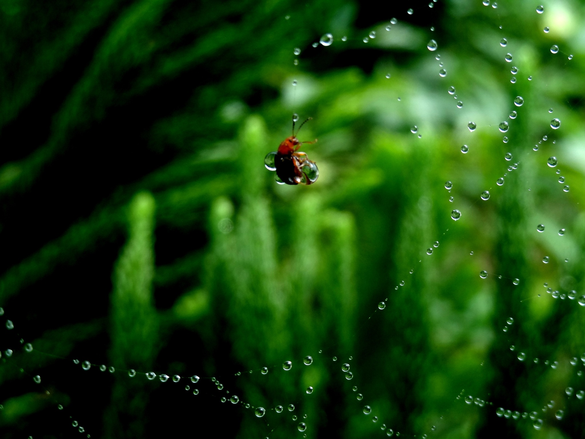 one drop can save a life by akash dhanai 8888