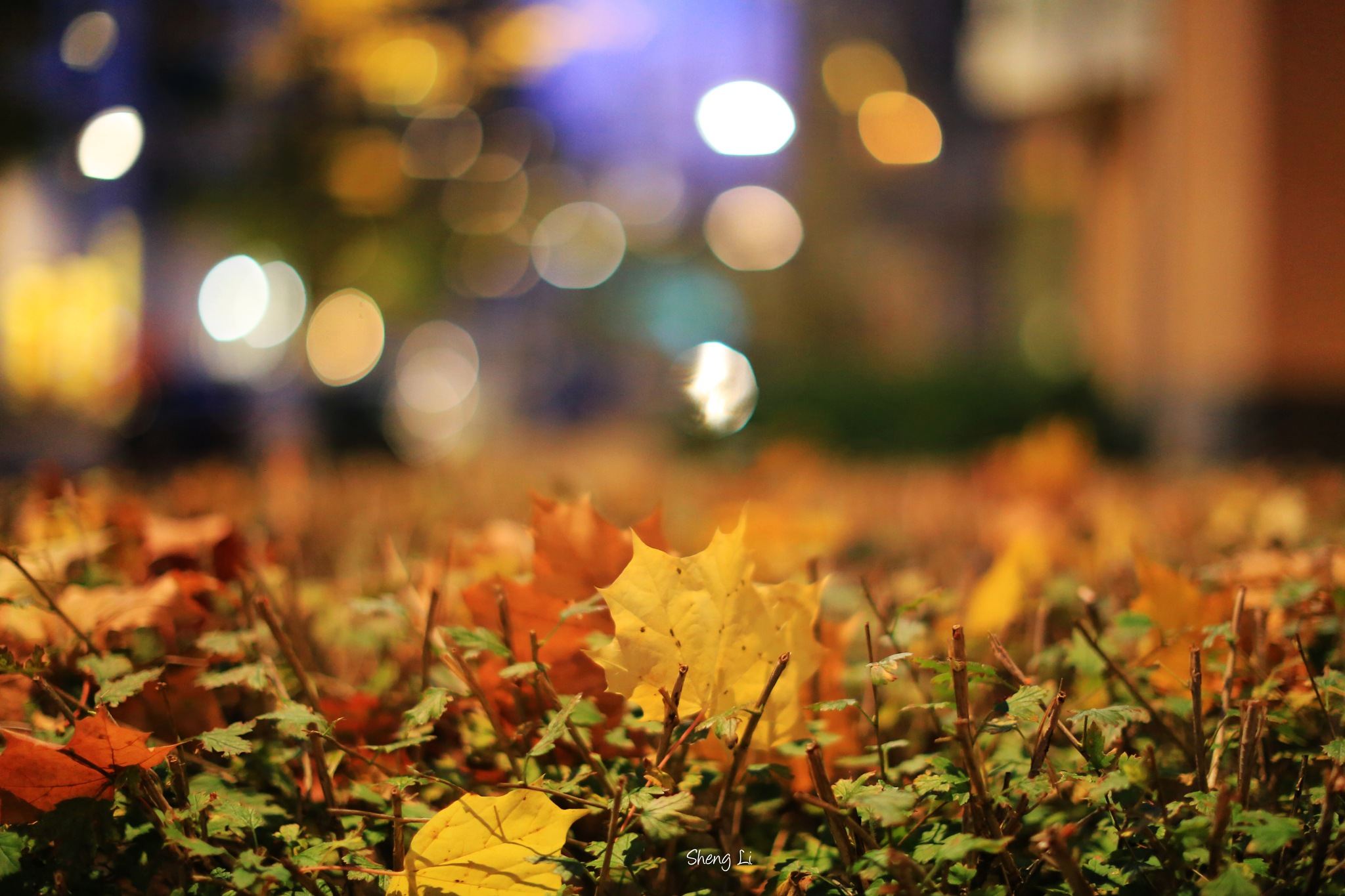 Autumn colors  by lis007