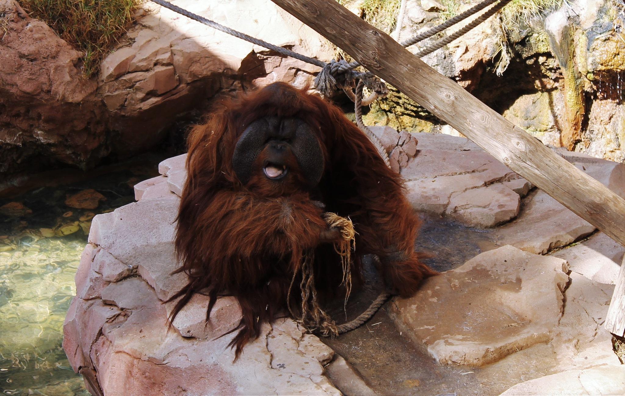 Monkey by Bjarndisyr