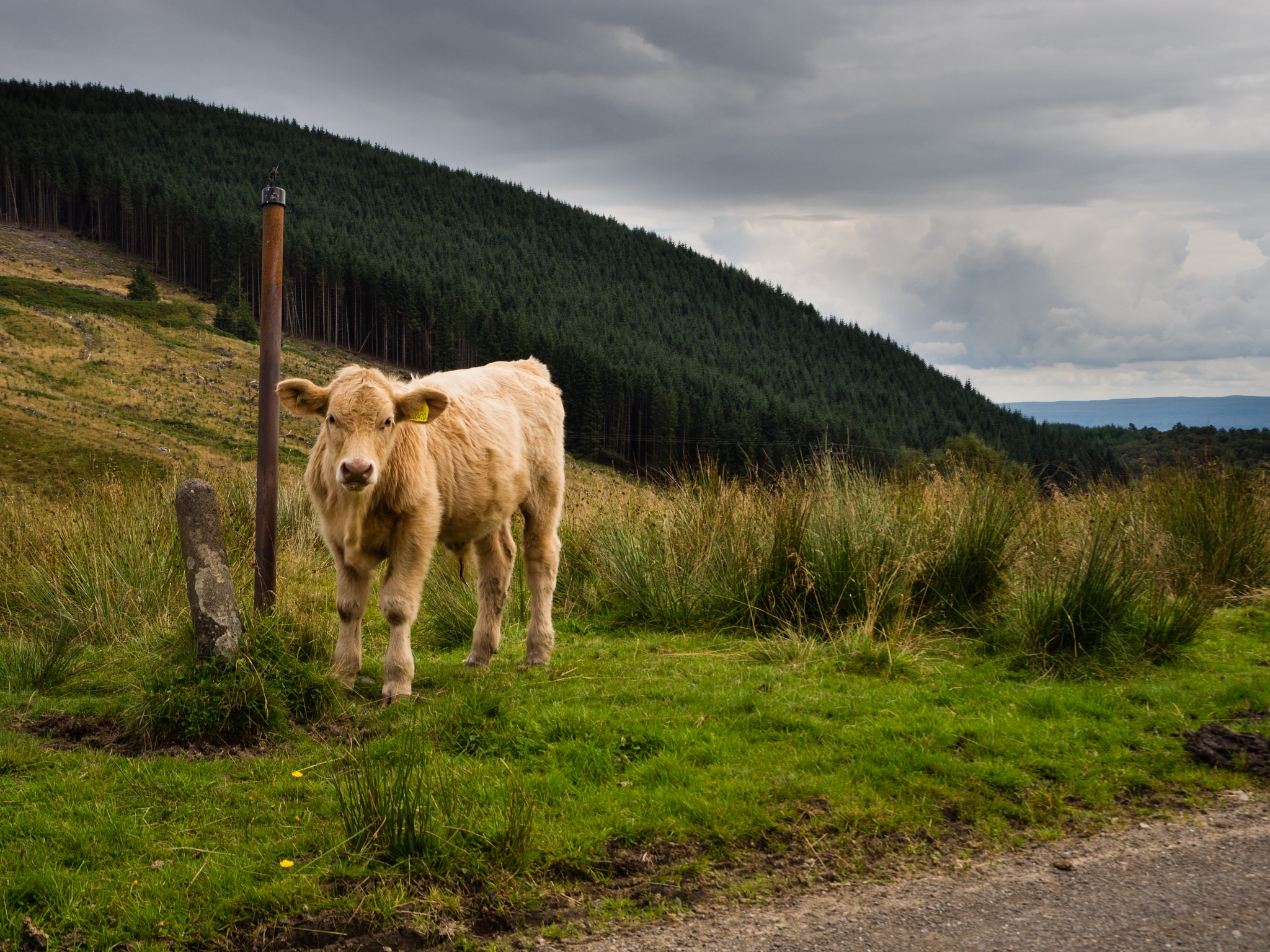 Wee Coo by mrife