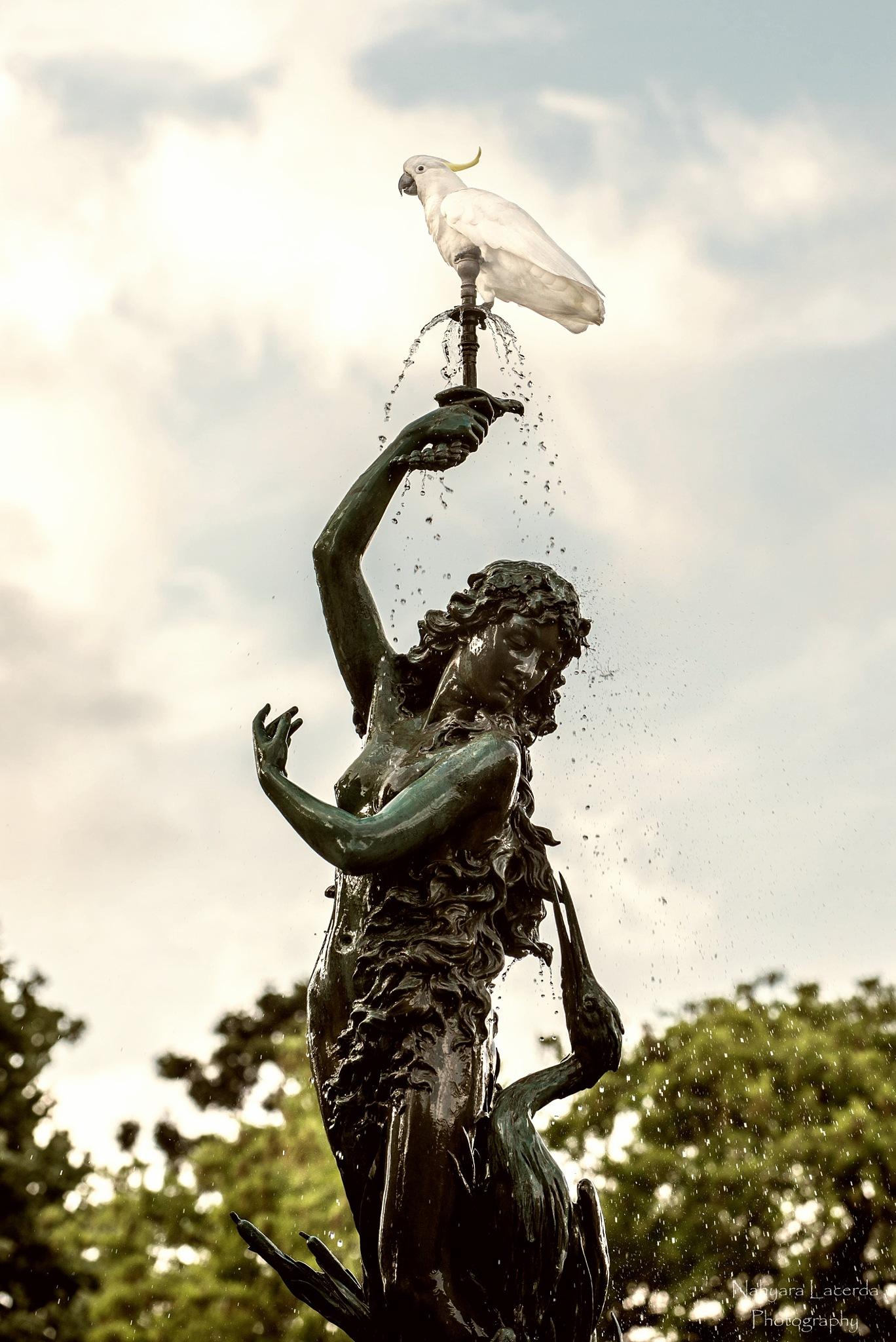 Lewis Wolfe Levy Fountain. Royal Botanic Gardens, Sydney, Australia by NahyaraLacerda
