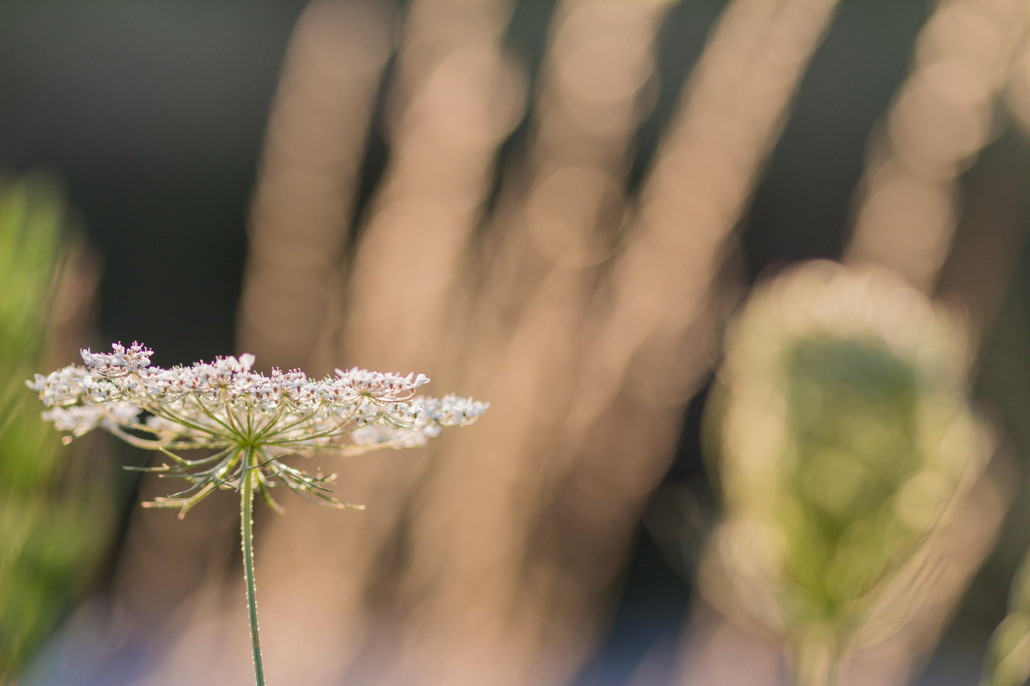 White flower by Andrea Prestileo